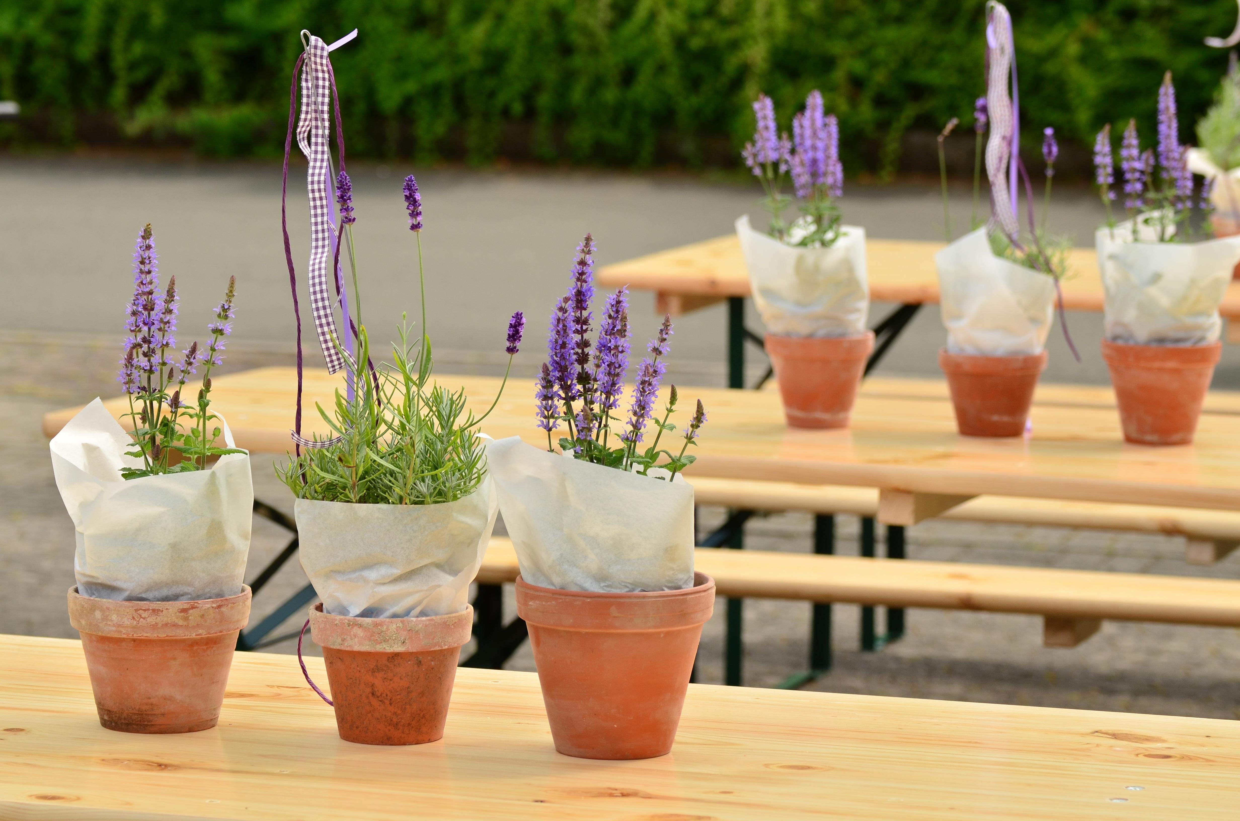 Blume Dekoration Mahlzeit Getränk Garten Lavendel Feiern Festival Aus  Blumentöpfe Holztische Kernstück Bierzelt Set Gäste Einladen