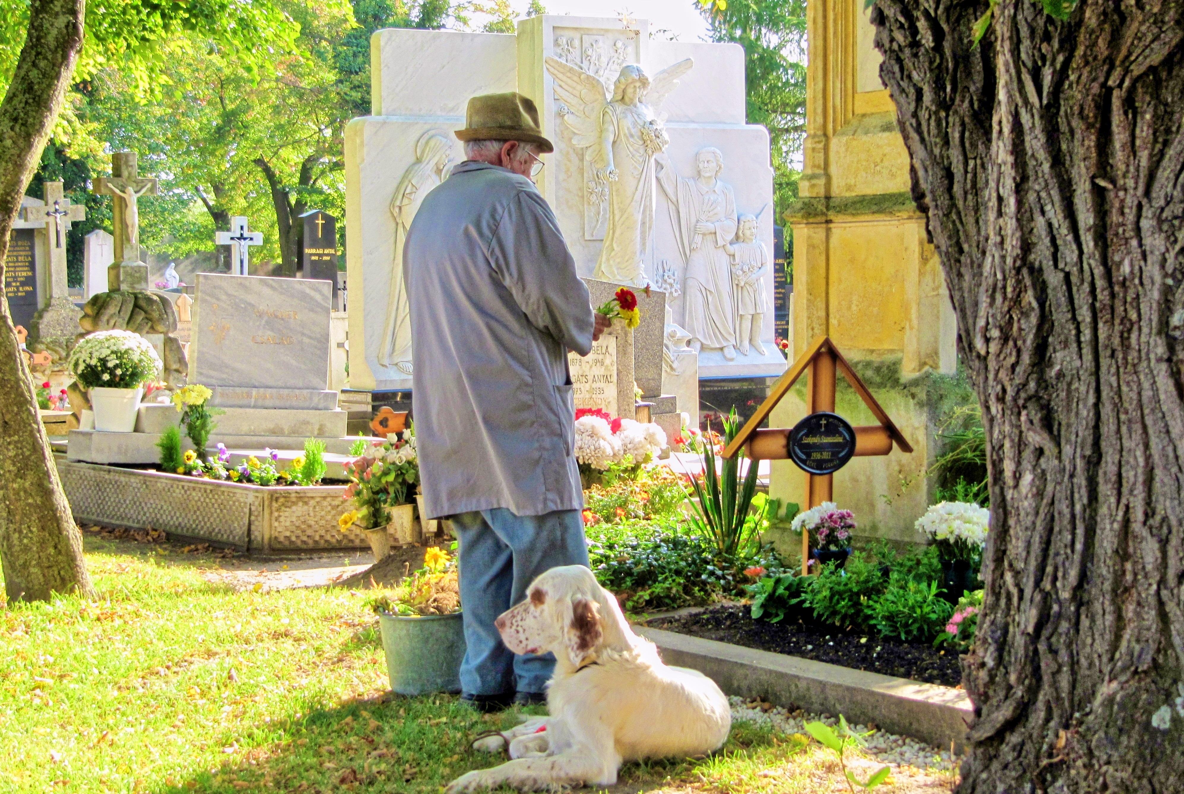 free images flower dog backyard rest garden animals graves