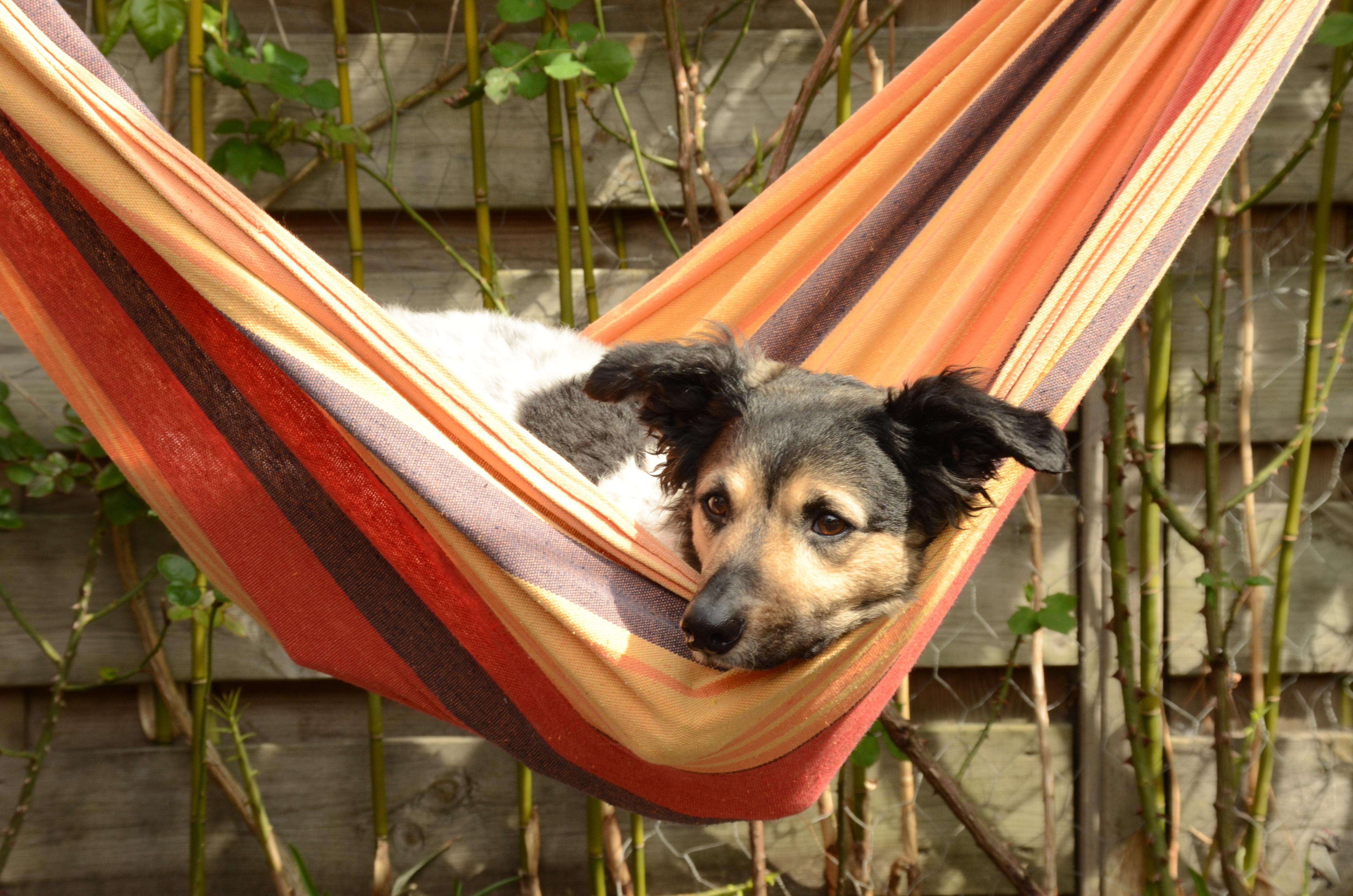 seat car covers product and protectors pet universal sakura hammock
