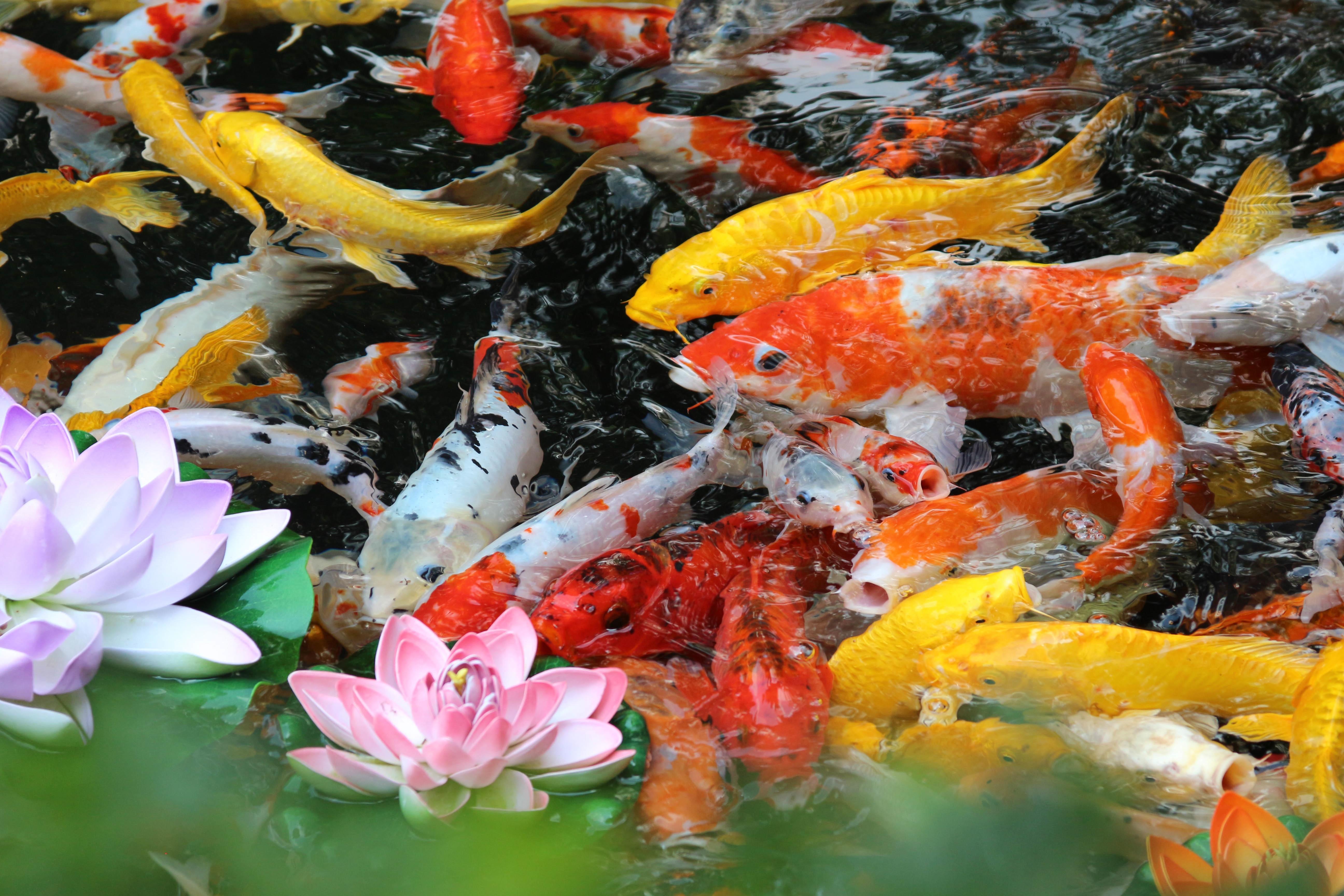 цветы картинки с рыбками первый раз мне