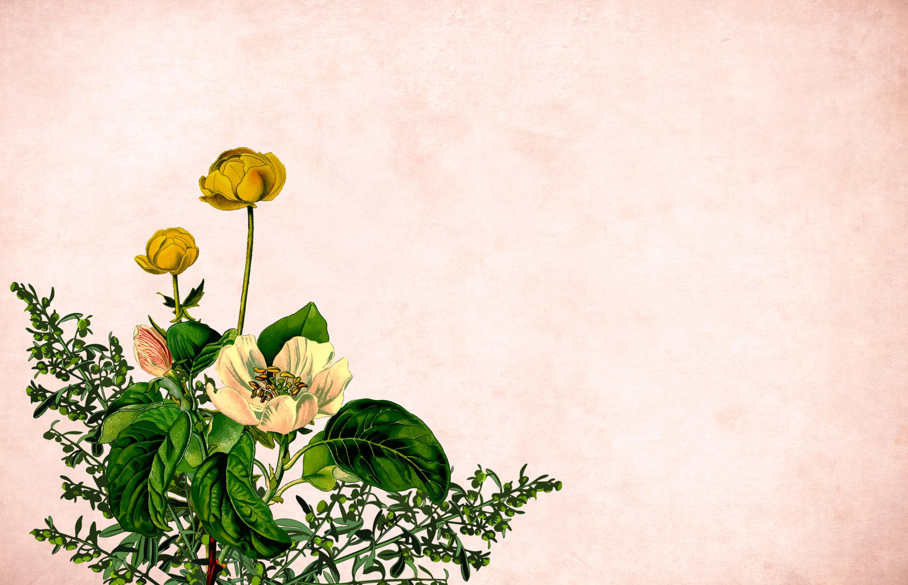 Free Images Flower Background Border Garden Frame