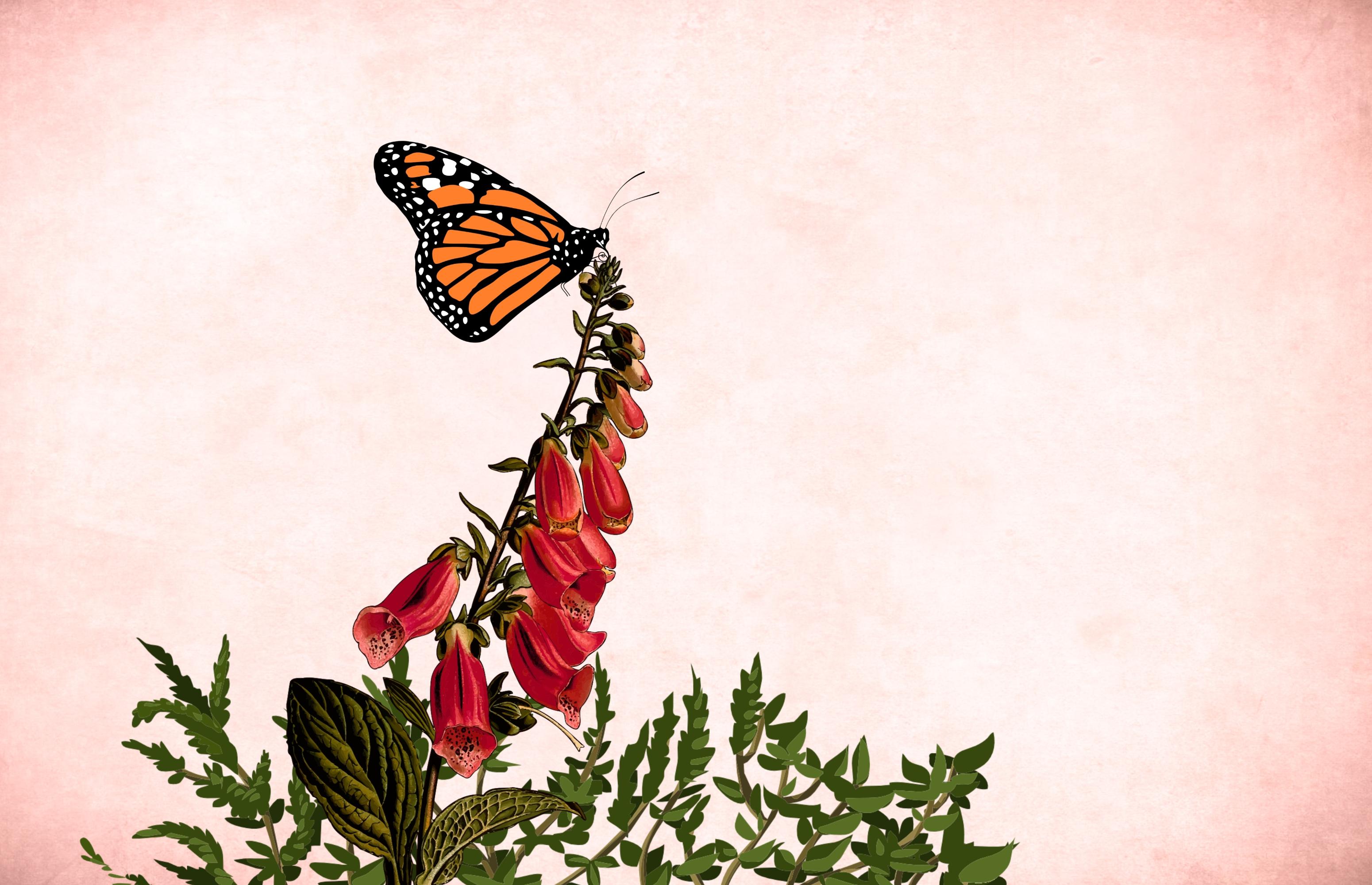 Fotograf Arka Fon Garden Frame Bagbozumu Kart Sanat Dugun