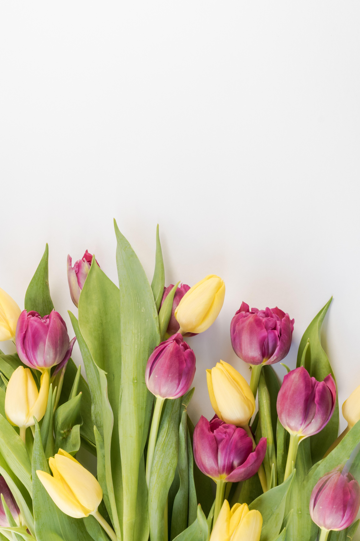 Fotos gratis flor planta floreciendo p talo tulip n - Cortar hierba alta ...