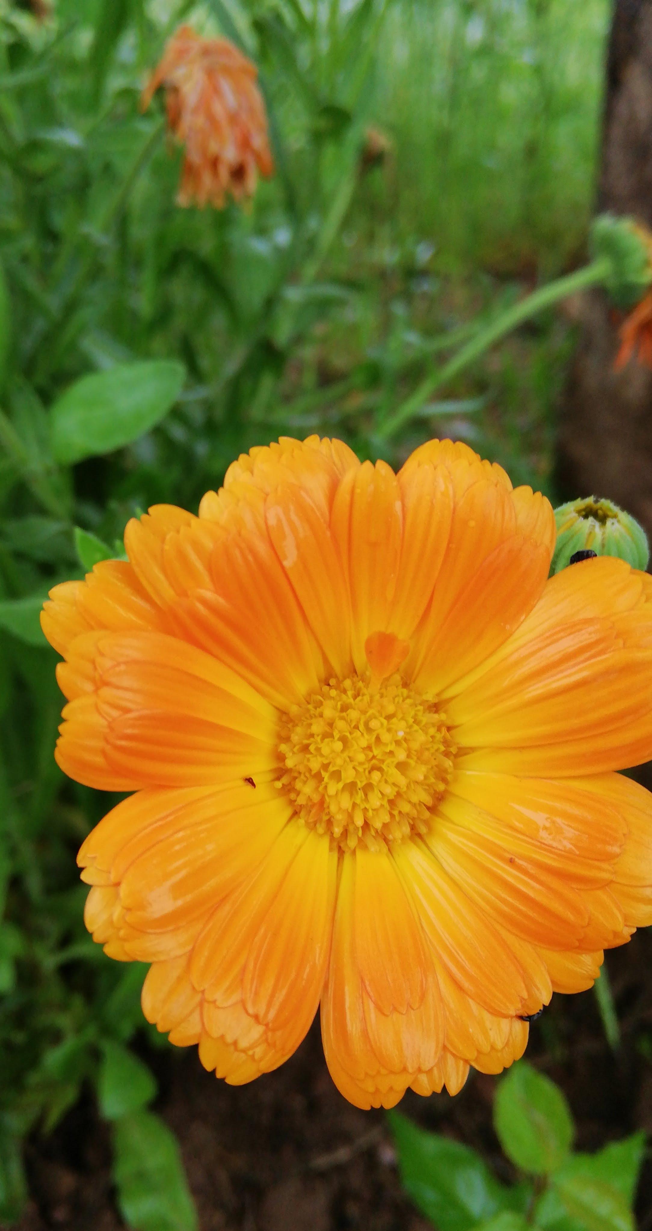 Free Images Flower Flowering Plant Petal Yellow English