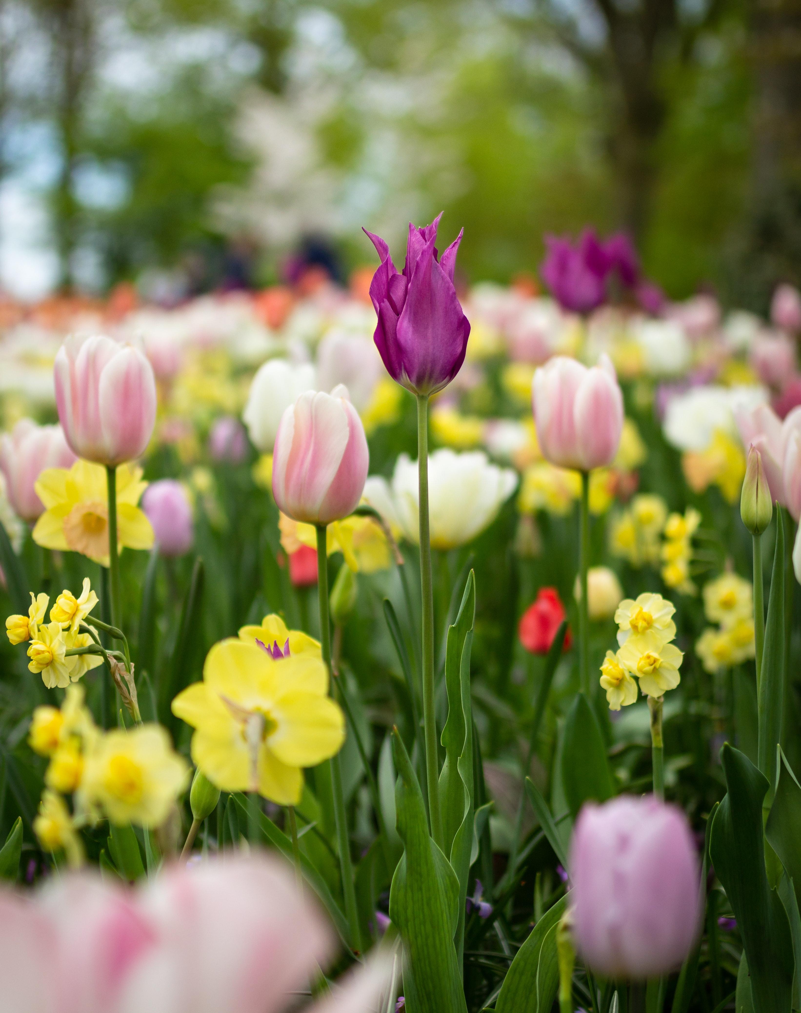 Цветочки весенние картинки помощью дотса
