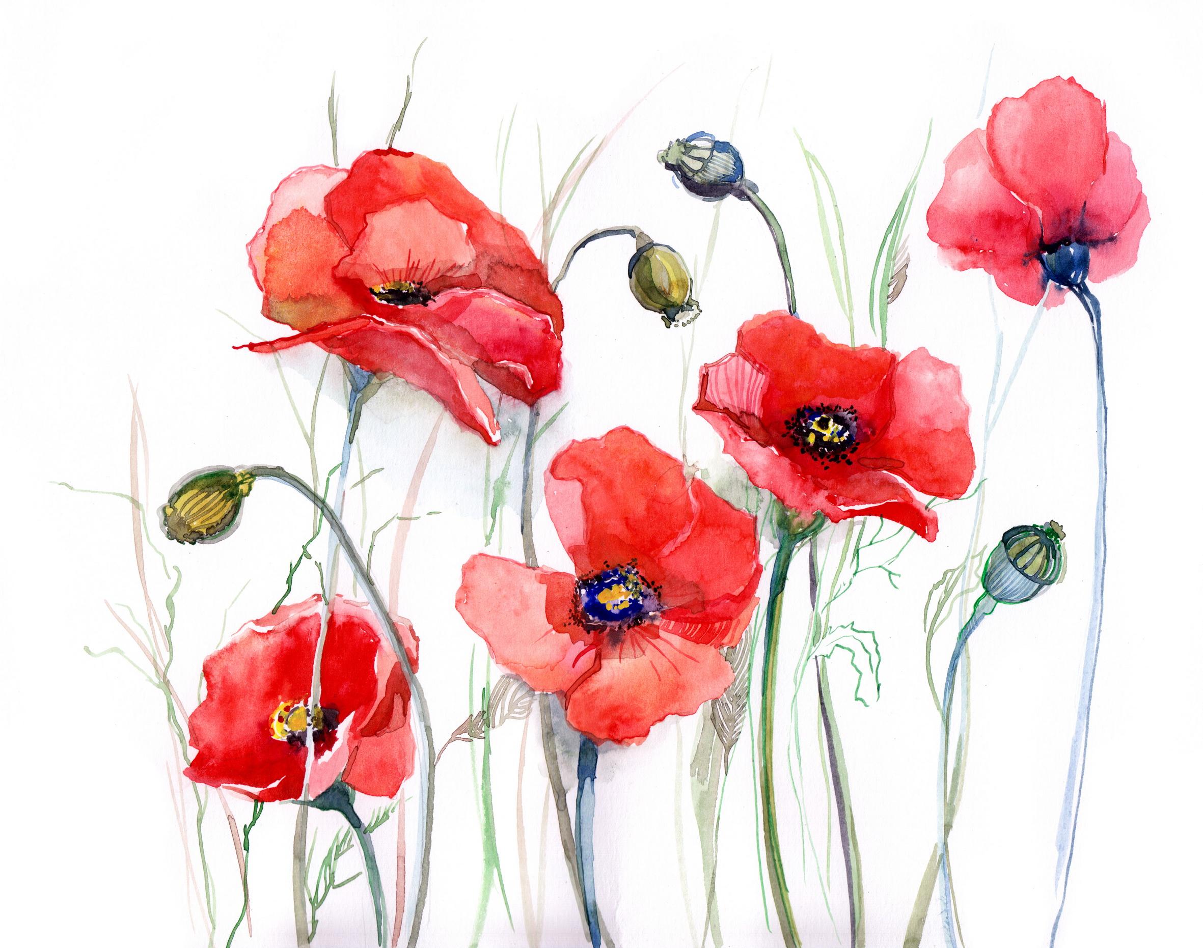 Free Images Flowering Plant Watercolor Paint Coquelicot Petal