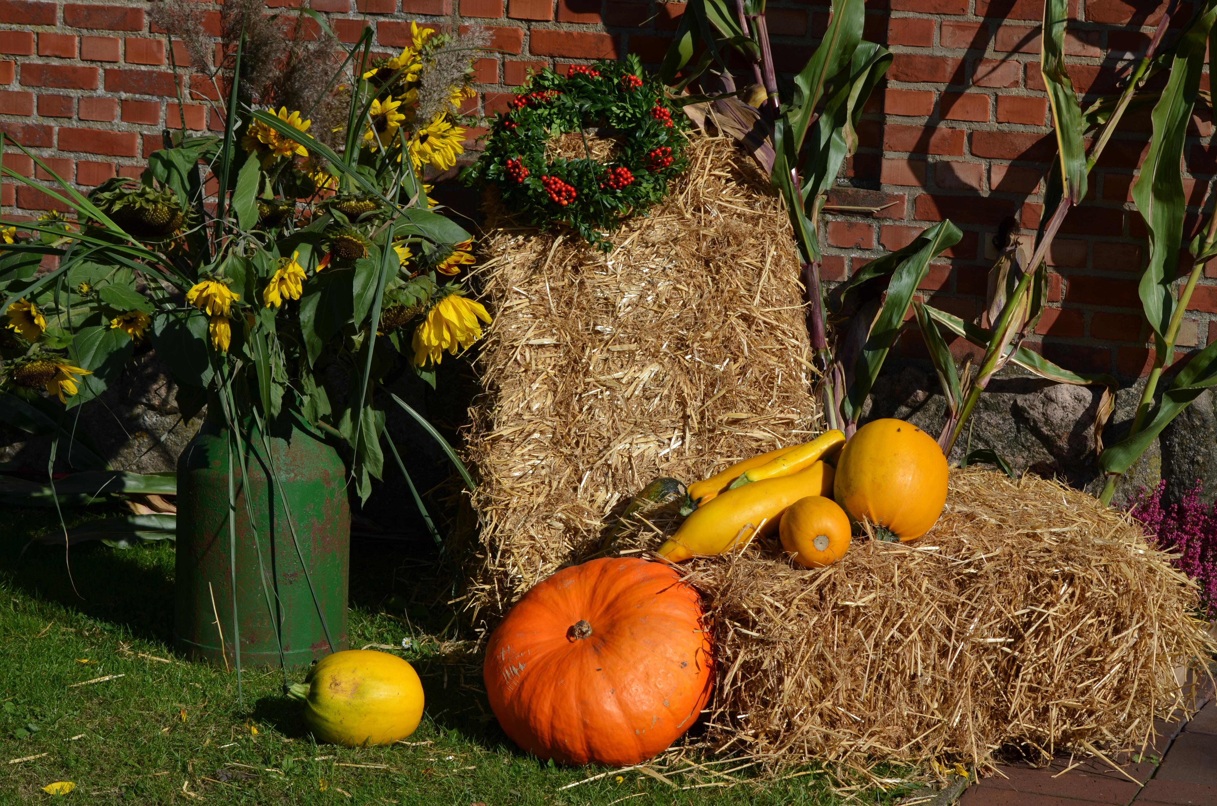 free images flower food produce pumpkin backyard garden