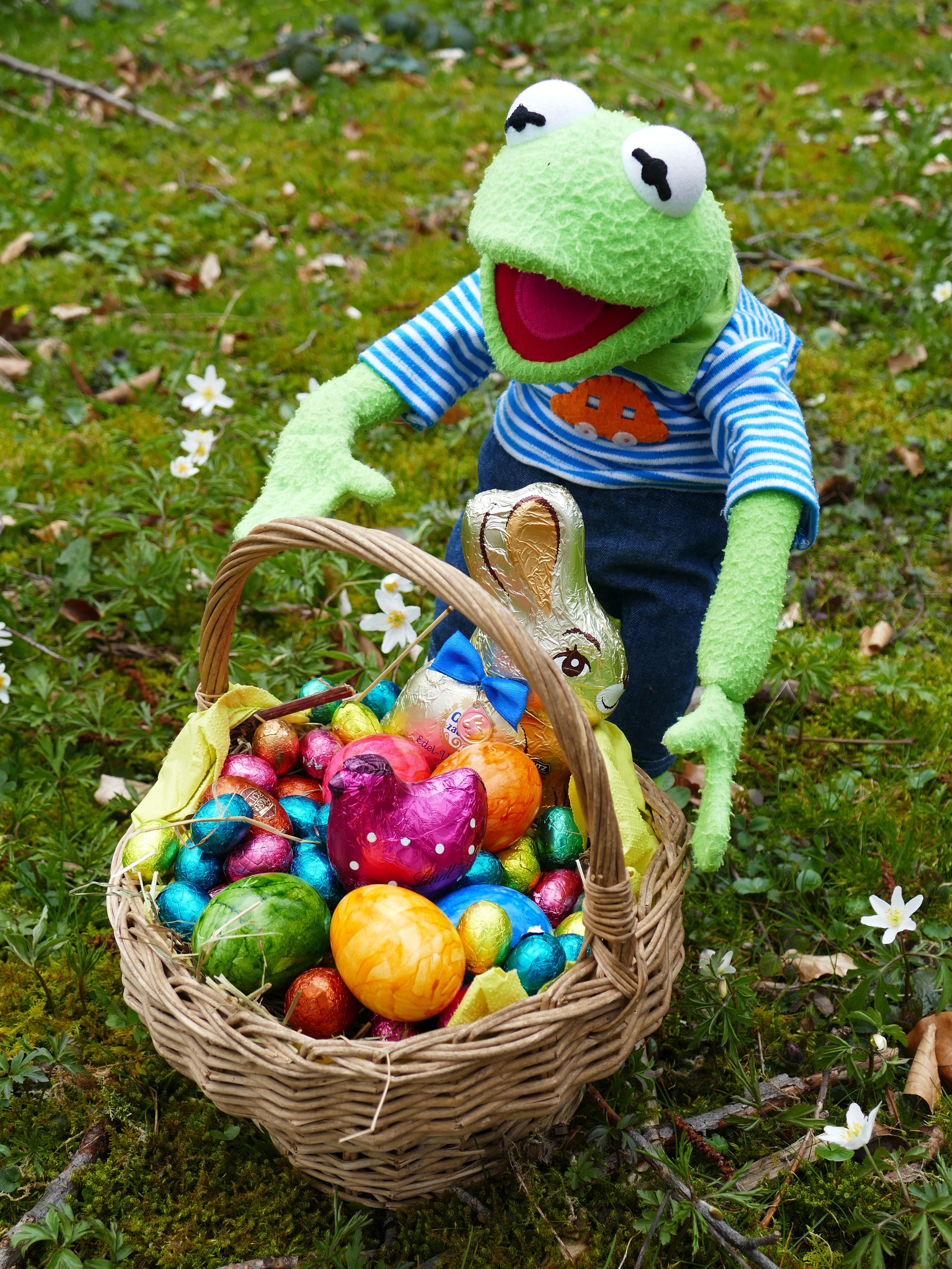 Images gratuites fleur aliments printemps produire grenouille color jardin d licieux - Coquille d oeuf dans le jardin ...
