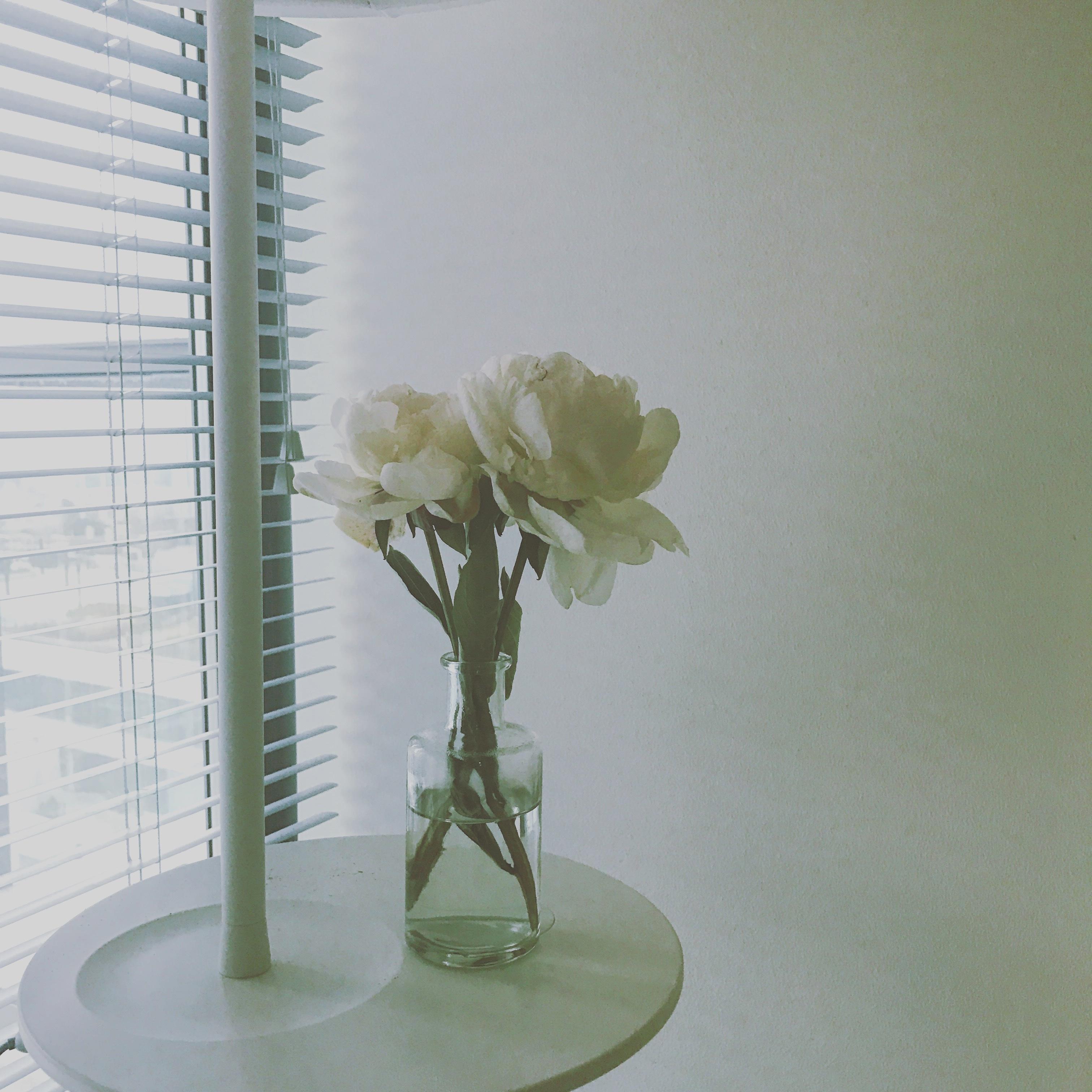 images gratuites fleur verre vase vert clairage. Black Bedroom Furniture Sets. Home Design Ideas