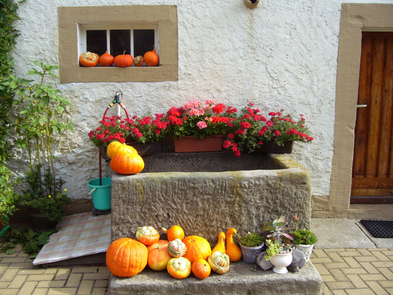 Veranda bauernhaus  Kostenlose foto : Blume, Zuhause, Veranda, Herbst, Halloween ...