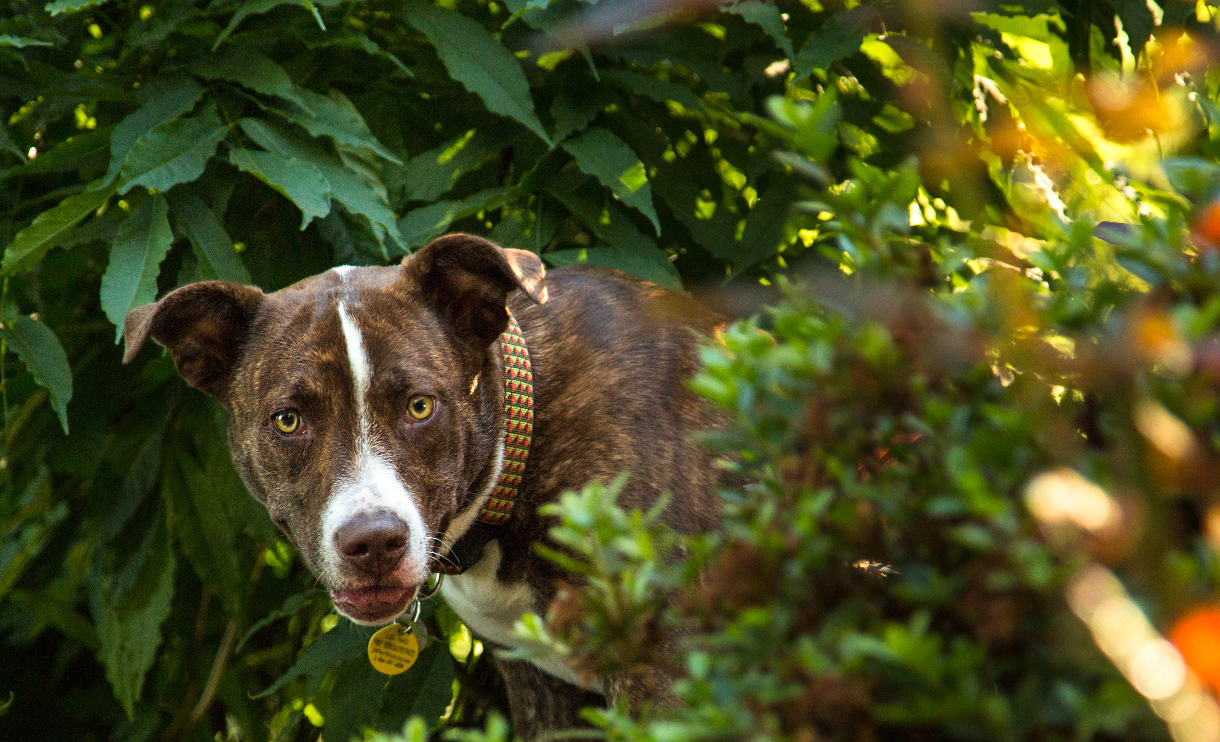 Fotos gratis : flor, casa, perrito, perro, animal, mascota, jardín ...