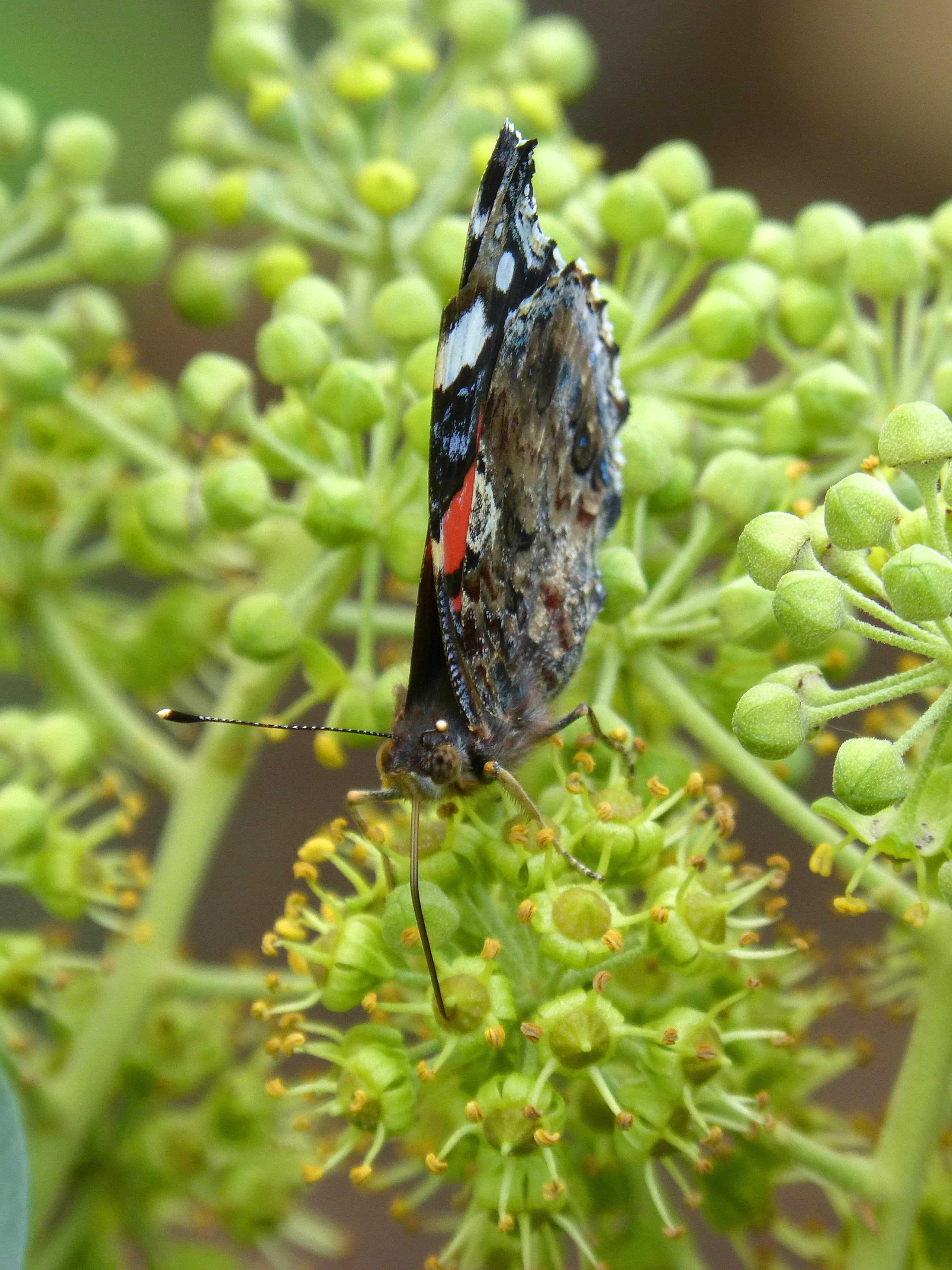 Фото насекомые цветы