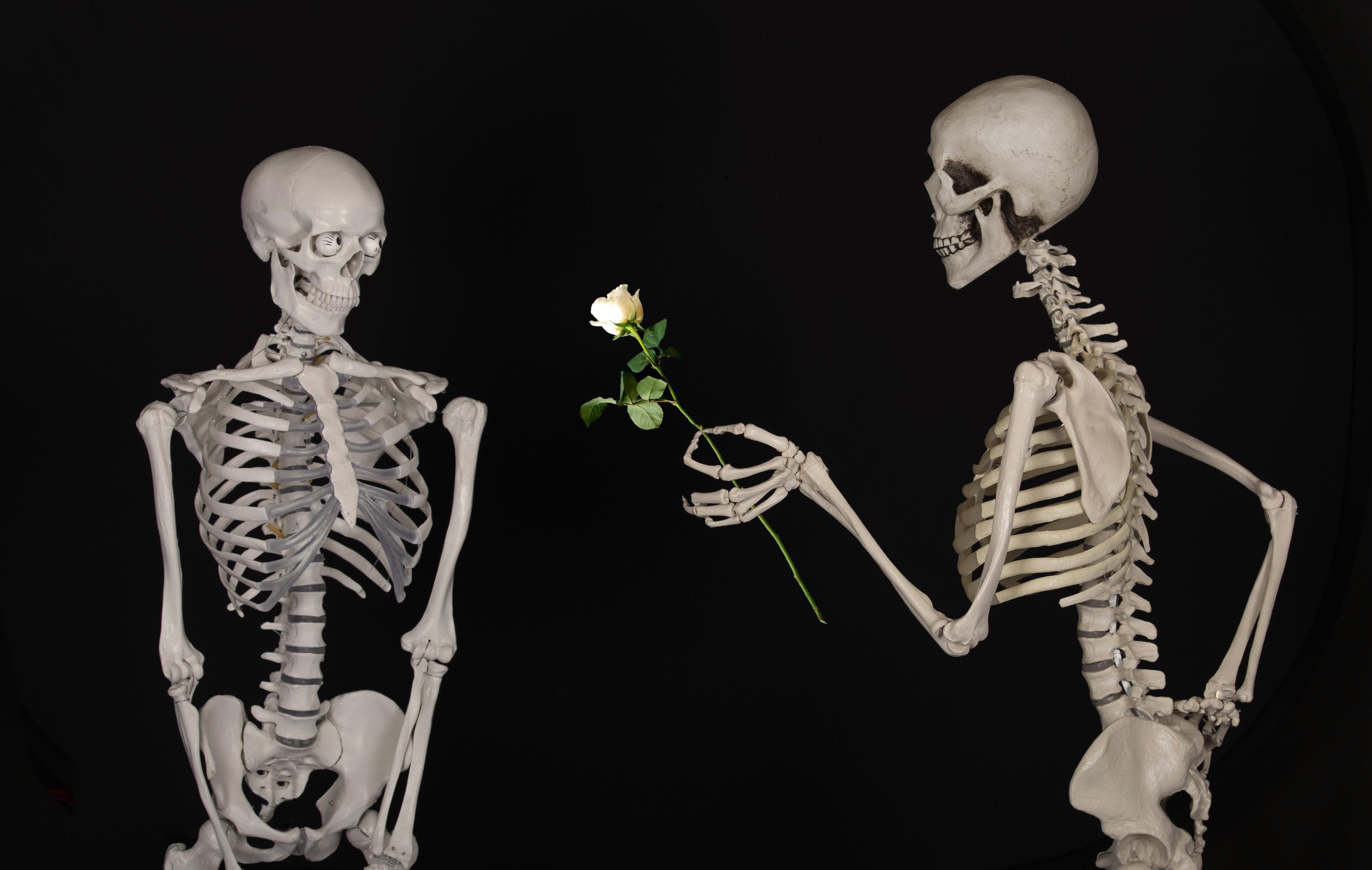 Fotos gratis : flor, amor, amistad, cuerpo humano, ilustración ...