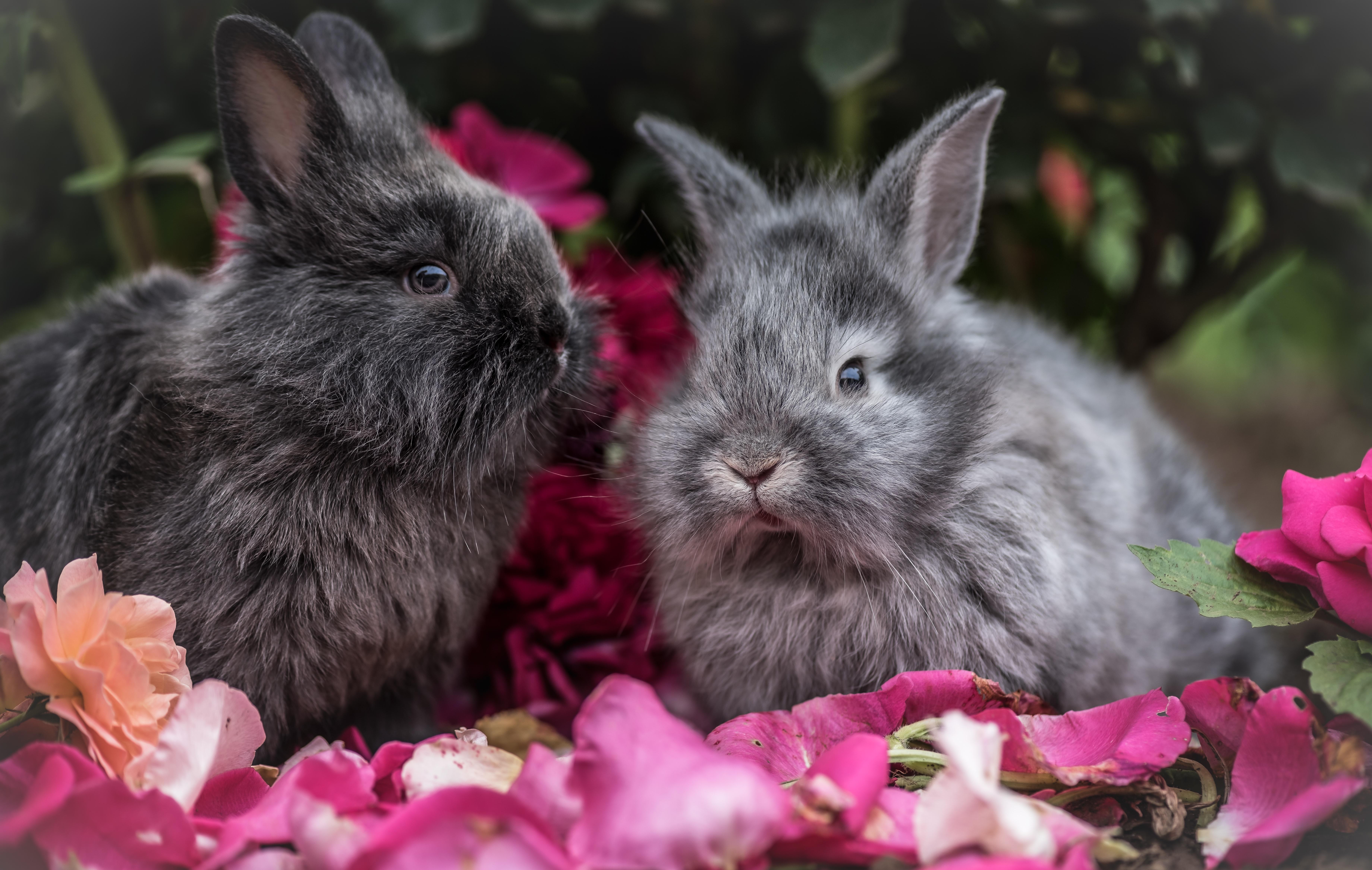 природа животные ккартинки зайцы цветы бесплатно
