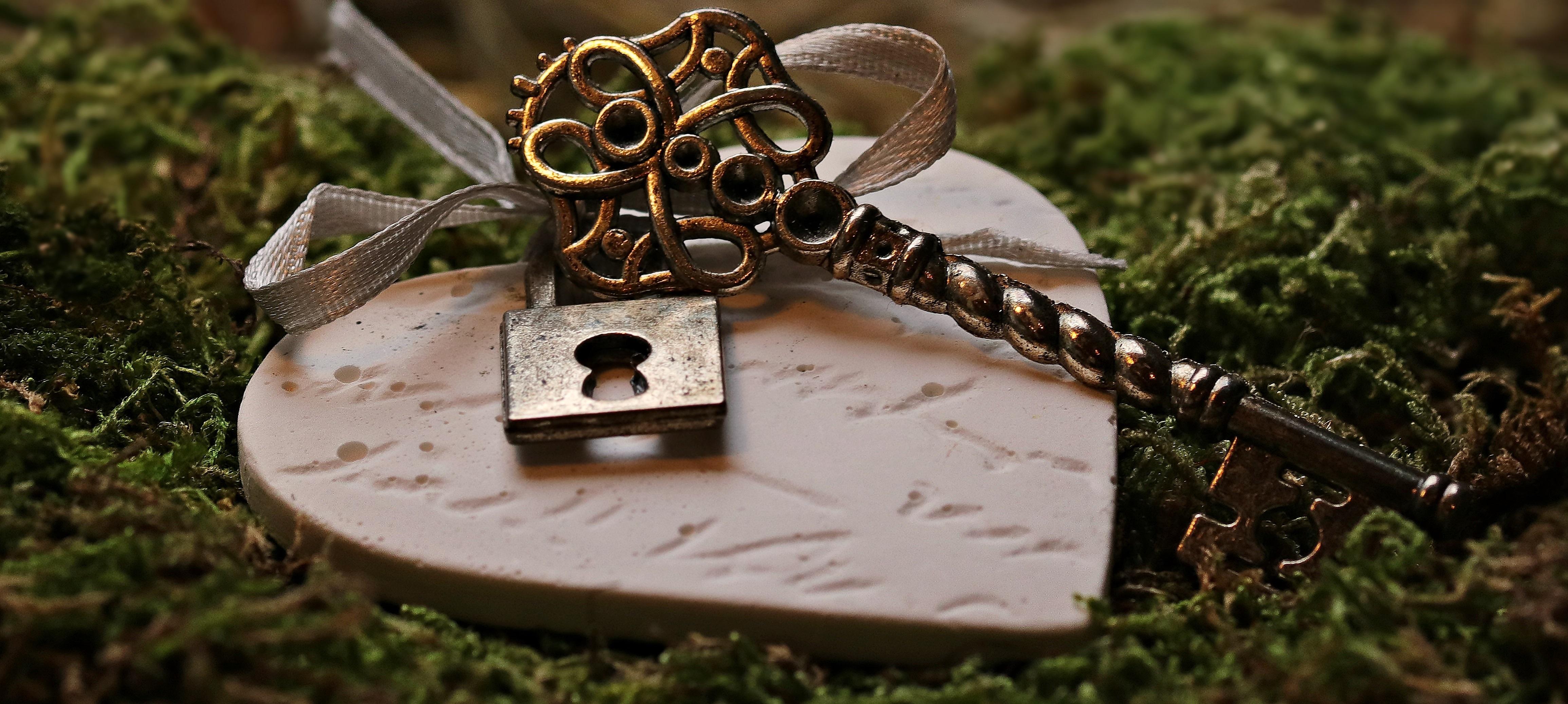 Free Images Flower Moss Love Symbol Romance Romantic Castle