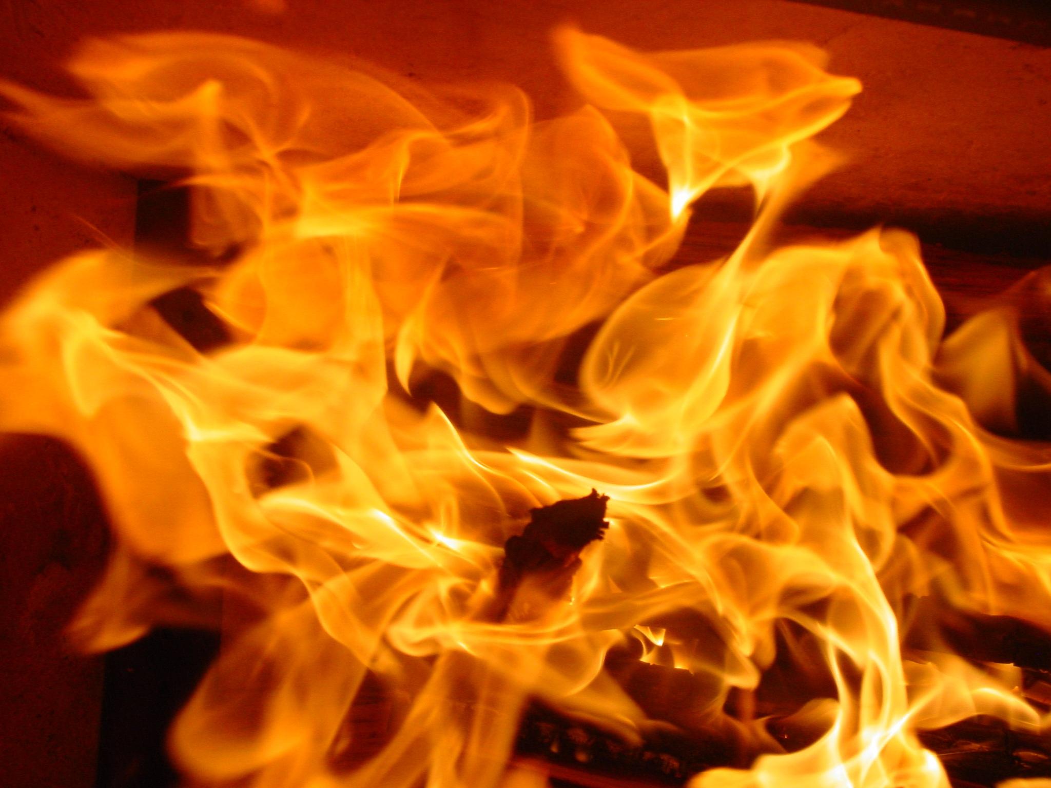 hoa trái cam Đỏ Ngọn lửa ngọn lửa Phát sáng màu vàng nhiệt năng lượng đốt