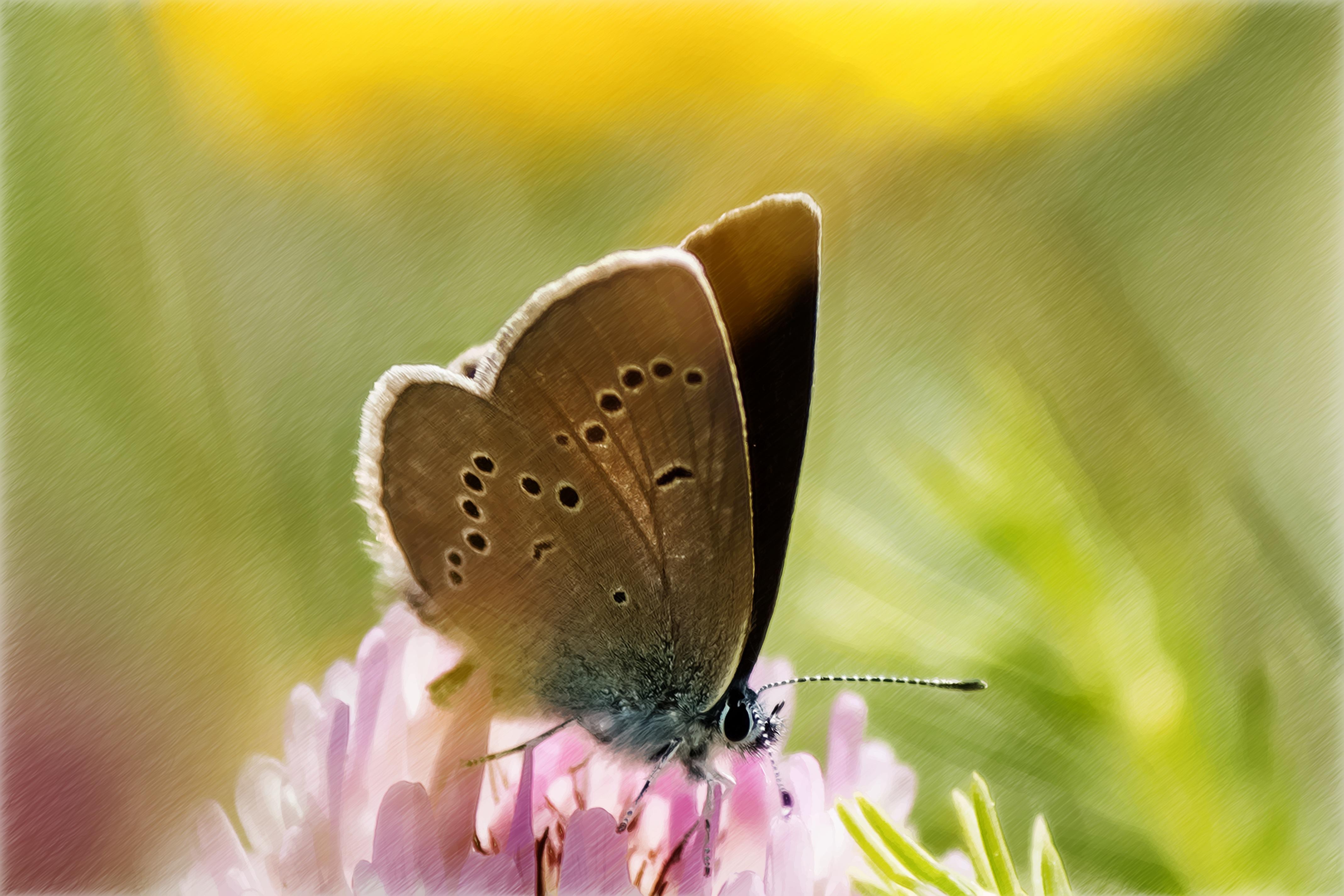 Fotos Gratis Flor Pétalo Polen Insecto Pintar Invertebrado