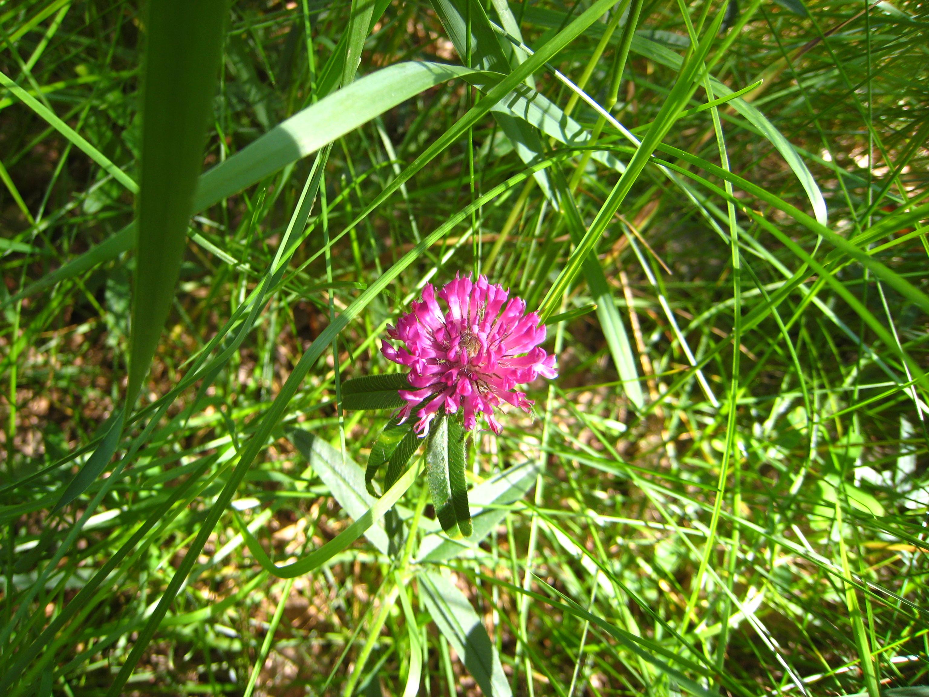 Обои сенокосное угодье, пейзаж, поле, луг, трава 16:10 бесплатно ... | 2304x3072