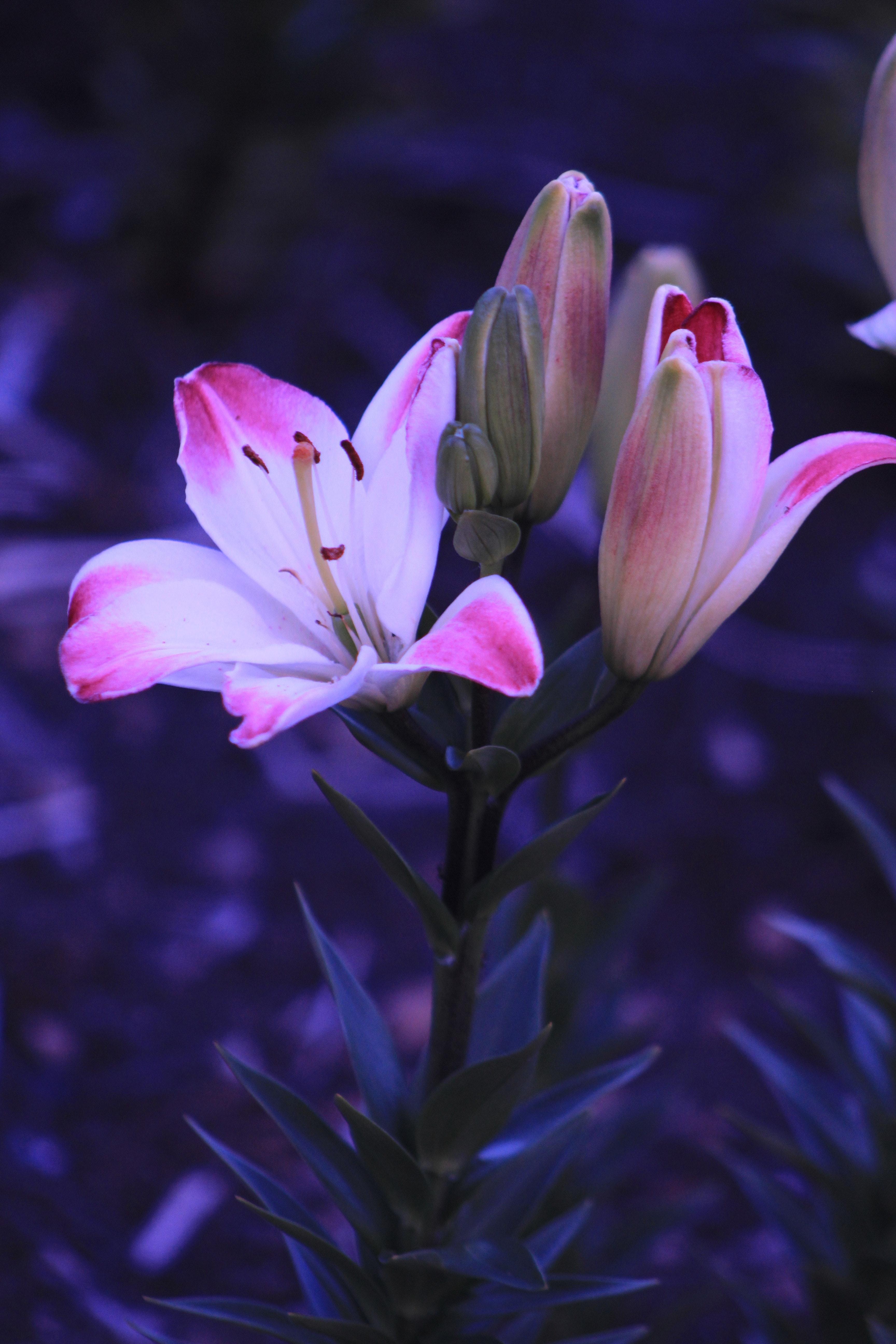 Цветы картинки орхидея лилия