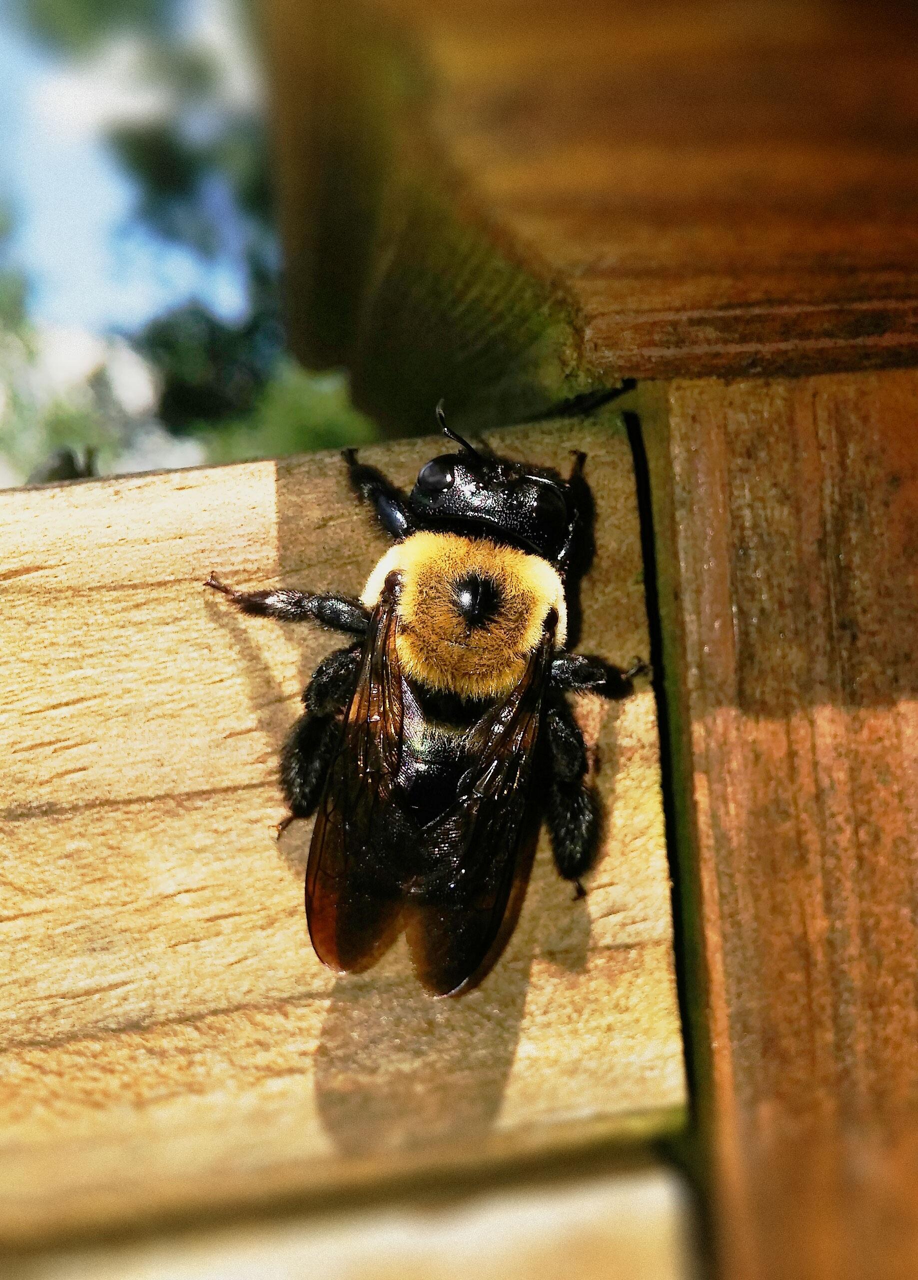 рожденные под черные пчелы древесные фото алюминия наиболее