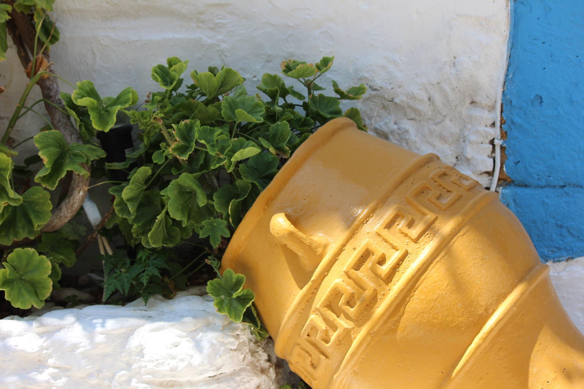 Free Images Flower Pot Yellow Flowerpot Man Made Object