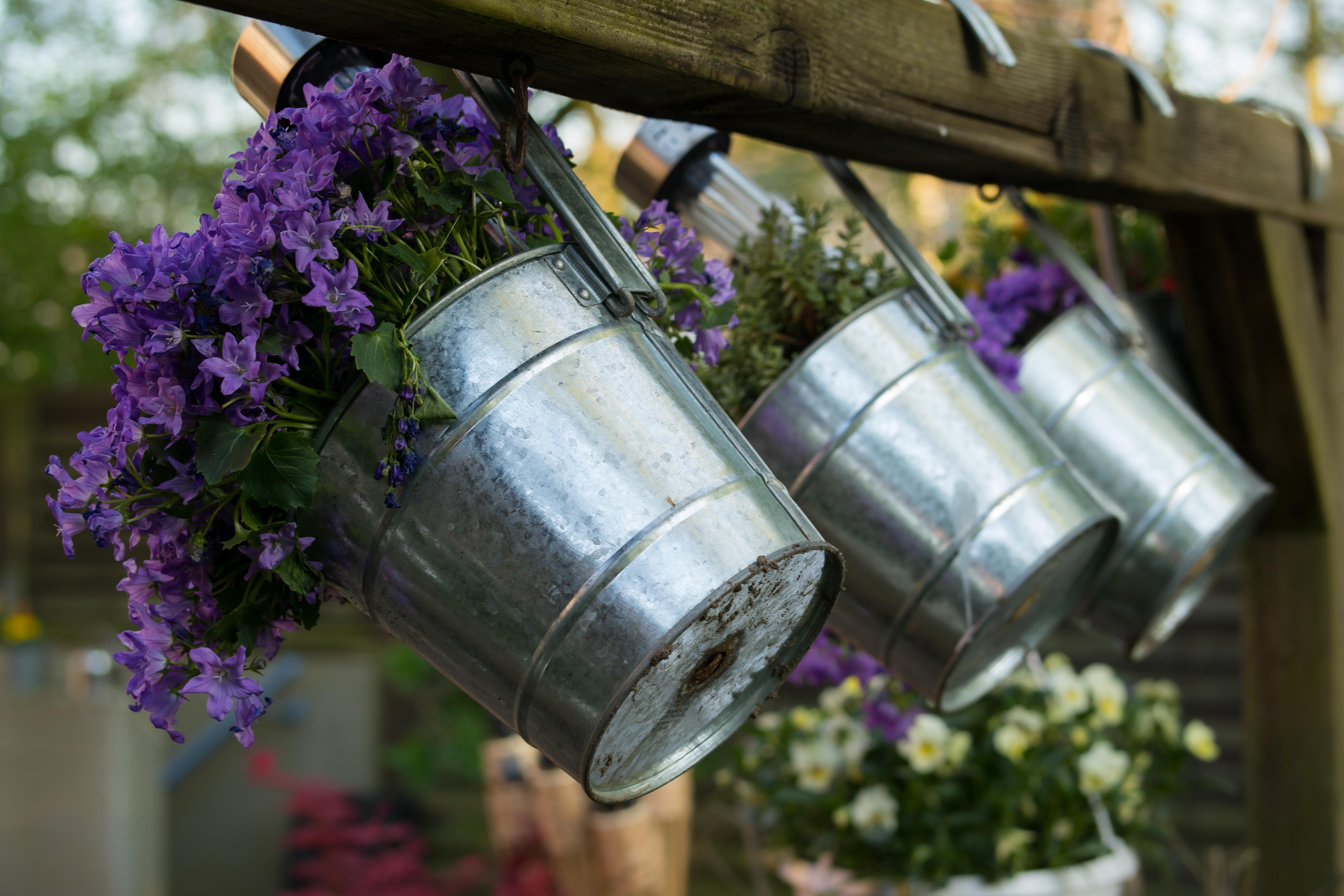 Images gratuites violet floraison d coration printemps vert couleur pot de fleur jardin - Pot de couleur pour jardin ...