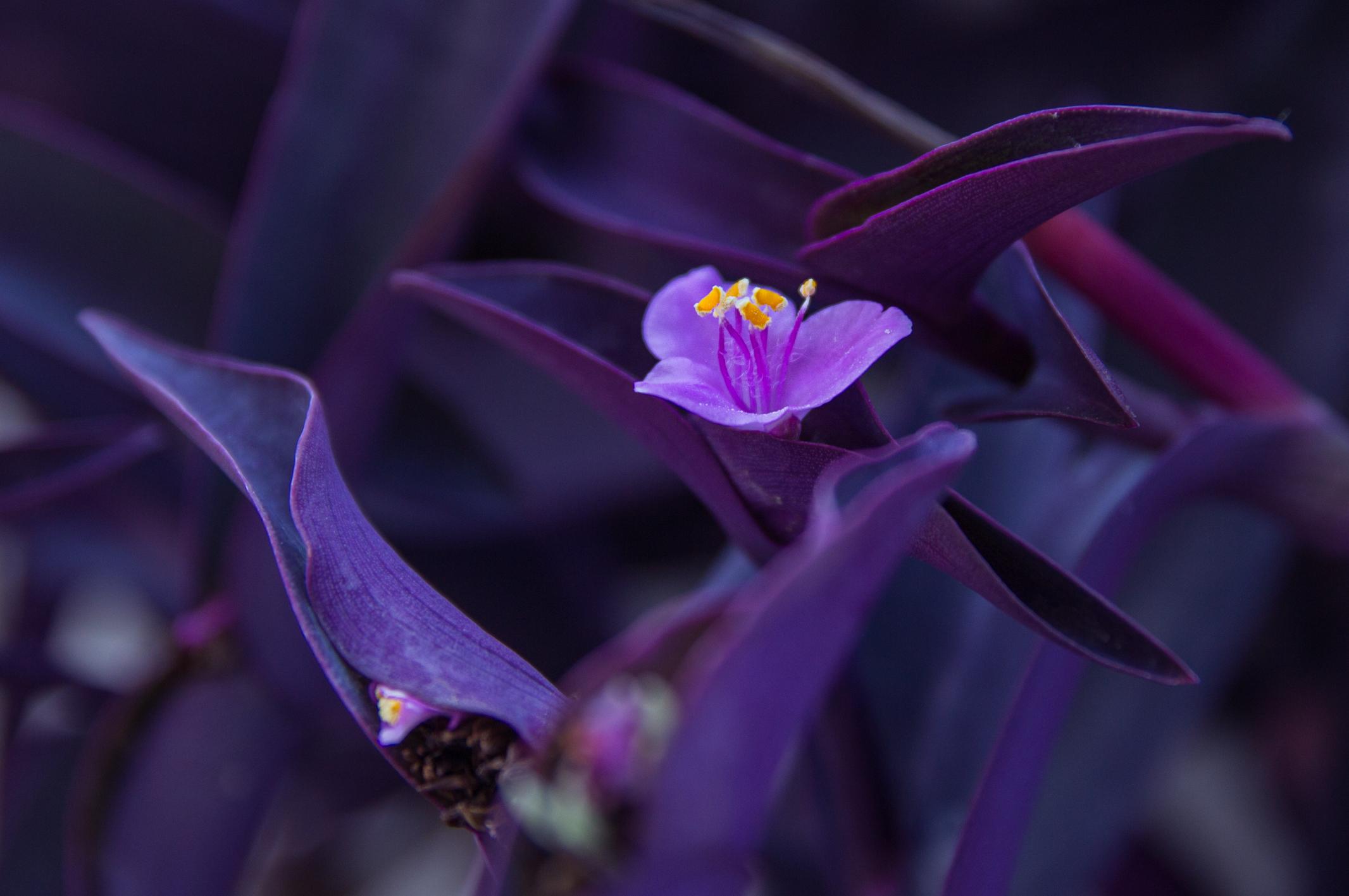 6000+ Wallpaper Bunga Violet