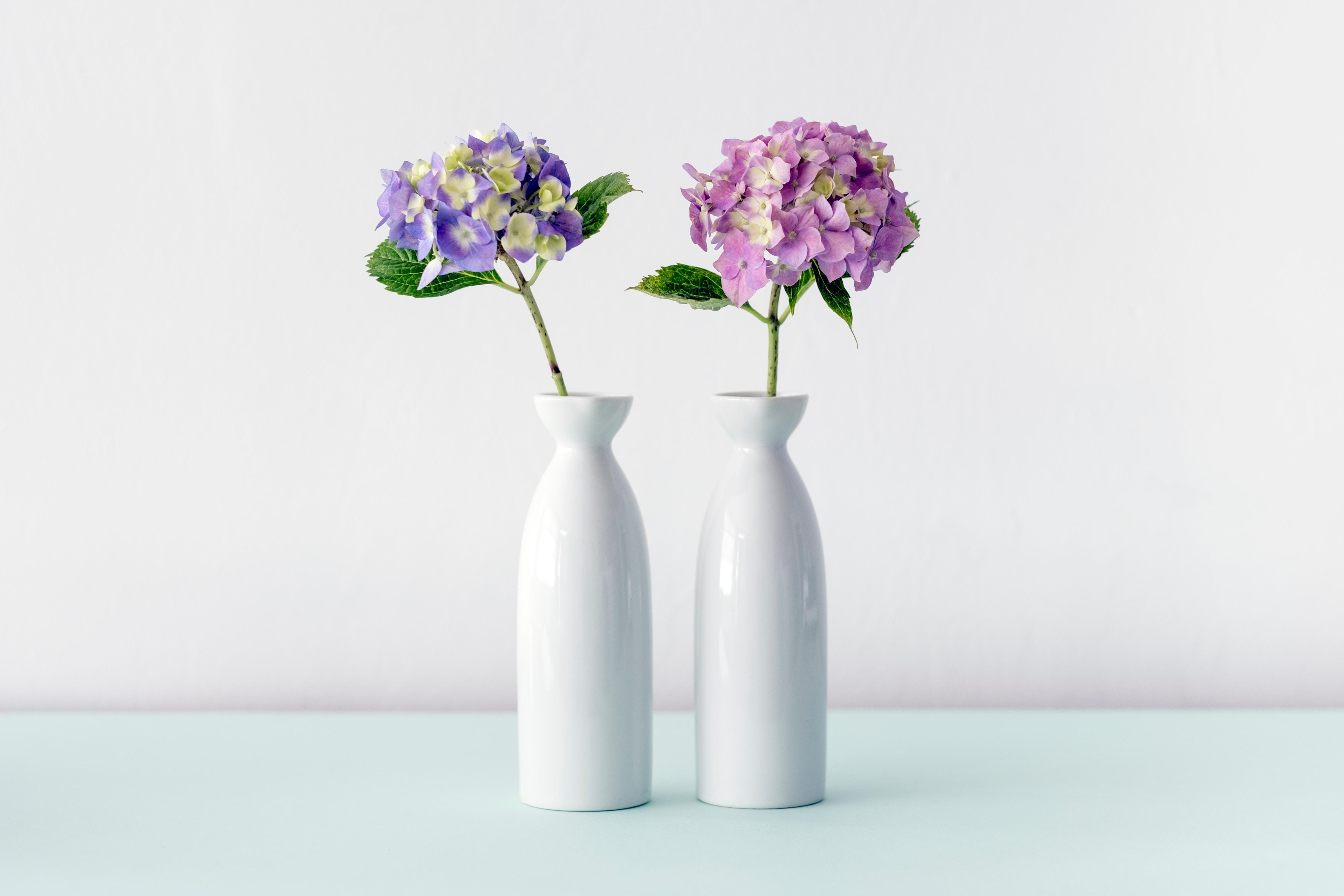 Vase Mit Blumen kostenlose foto blume lila vase cooles bild blumentopf cooles