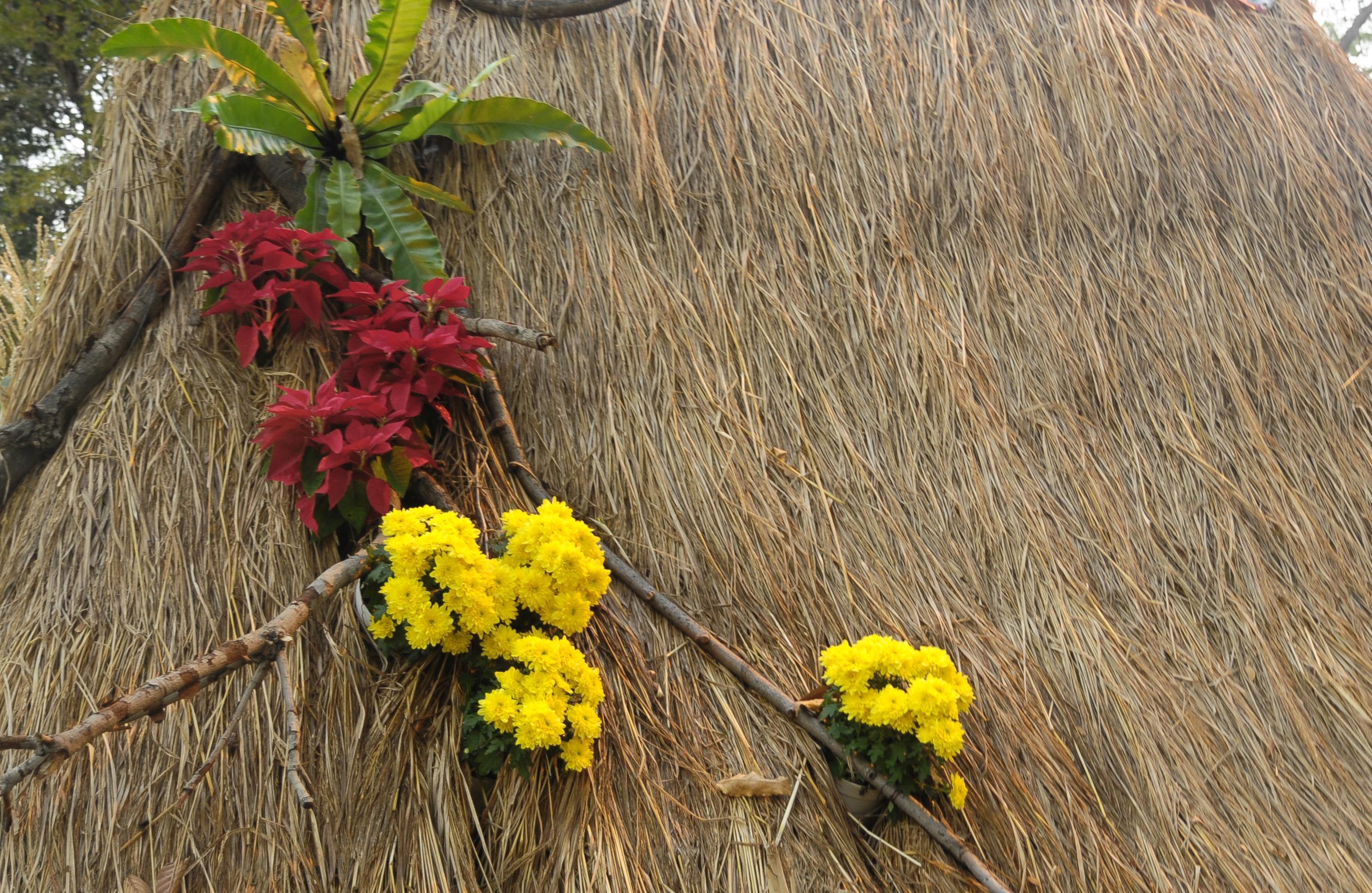 Gambar Sedotan Pemandangan Kuning Menanam Musim Semi Kayu Ranting Rumput Pohon Cabang Tanaman Berbunga Bunga Liar Mimosa Lantana Bagasi Tumbuhan Perdu 2820x1836 Trang Pham 1591515 Galeri Foto Pxhere