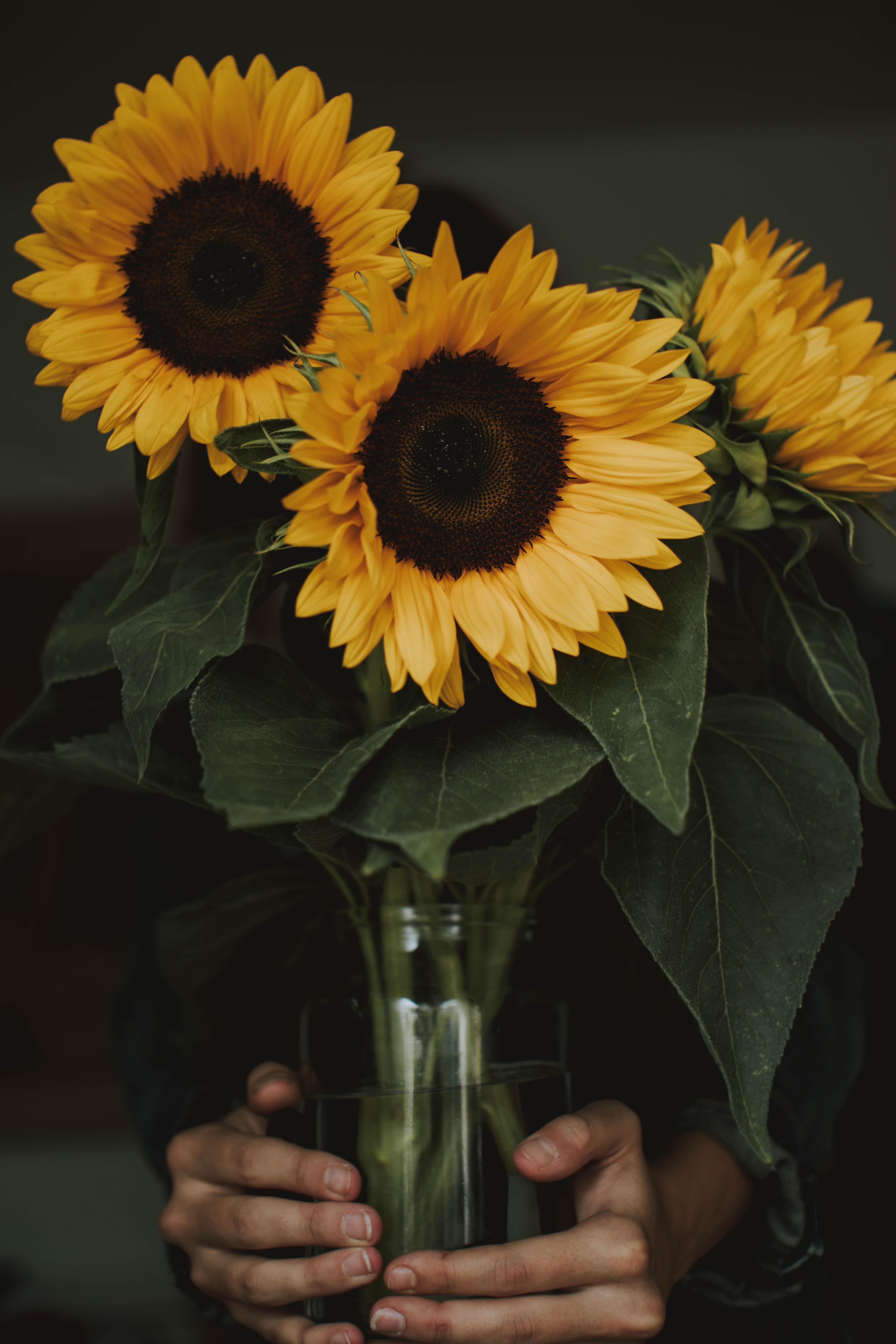 все фото картинки цветы подсолнухи в вазах зятем, мной