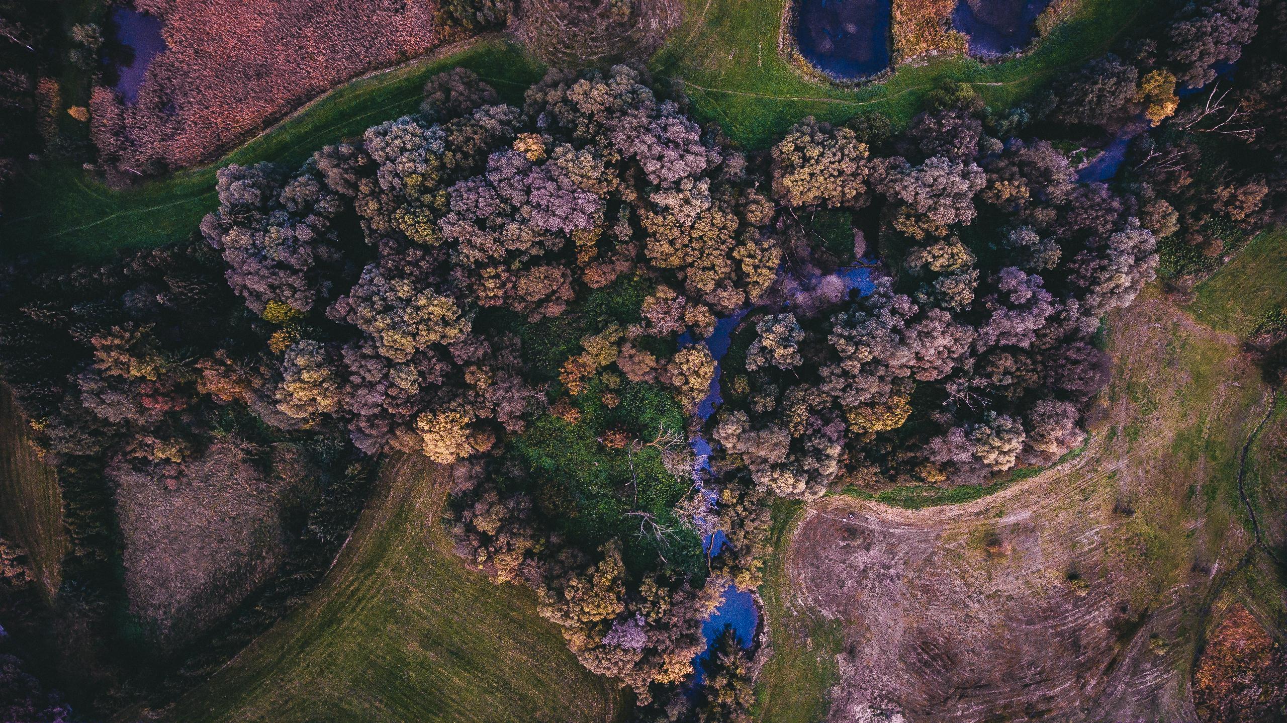 images gratuites fleur terrain flore r cif de corail capture d 39 cran photographie. Black Bedroom Furniture Sets. Home Design Ideas