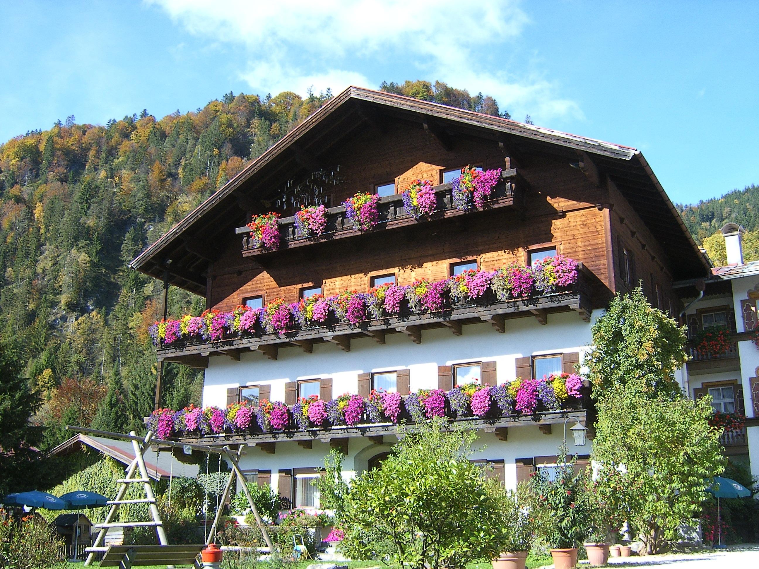 Бавария цветок
