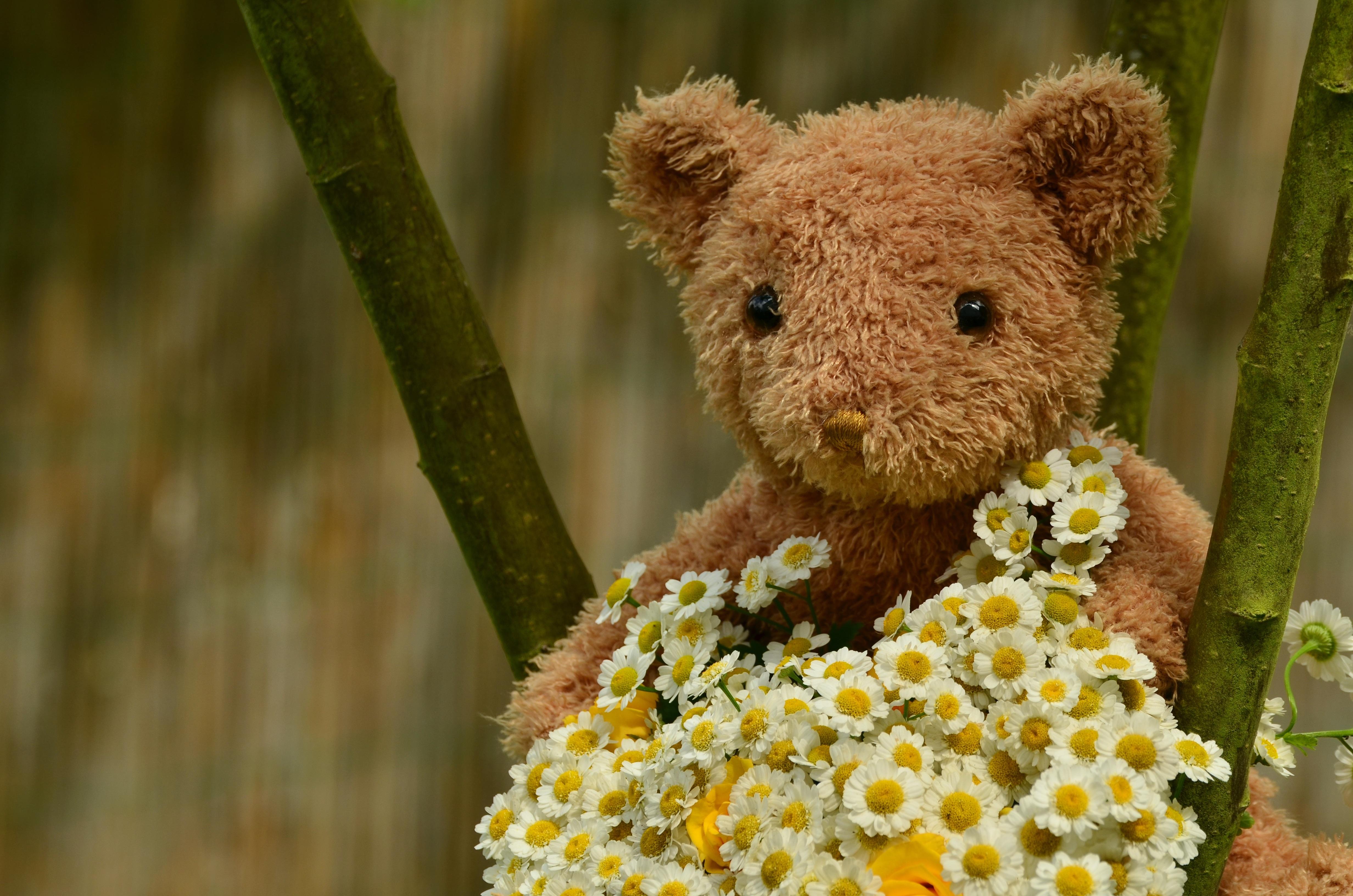 Free Images Flower Wildlife Romance Toy Fauna Teddy Bear