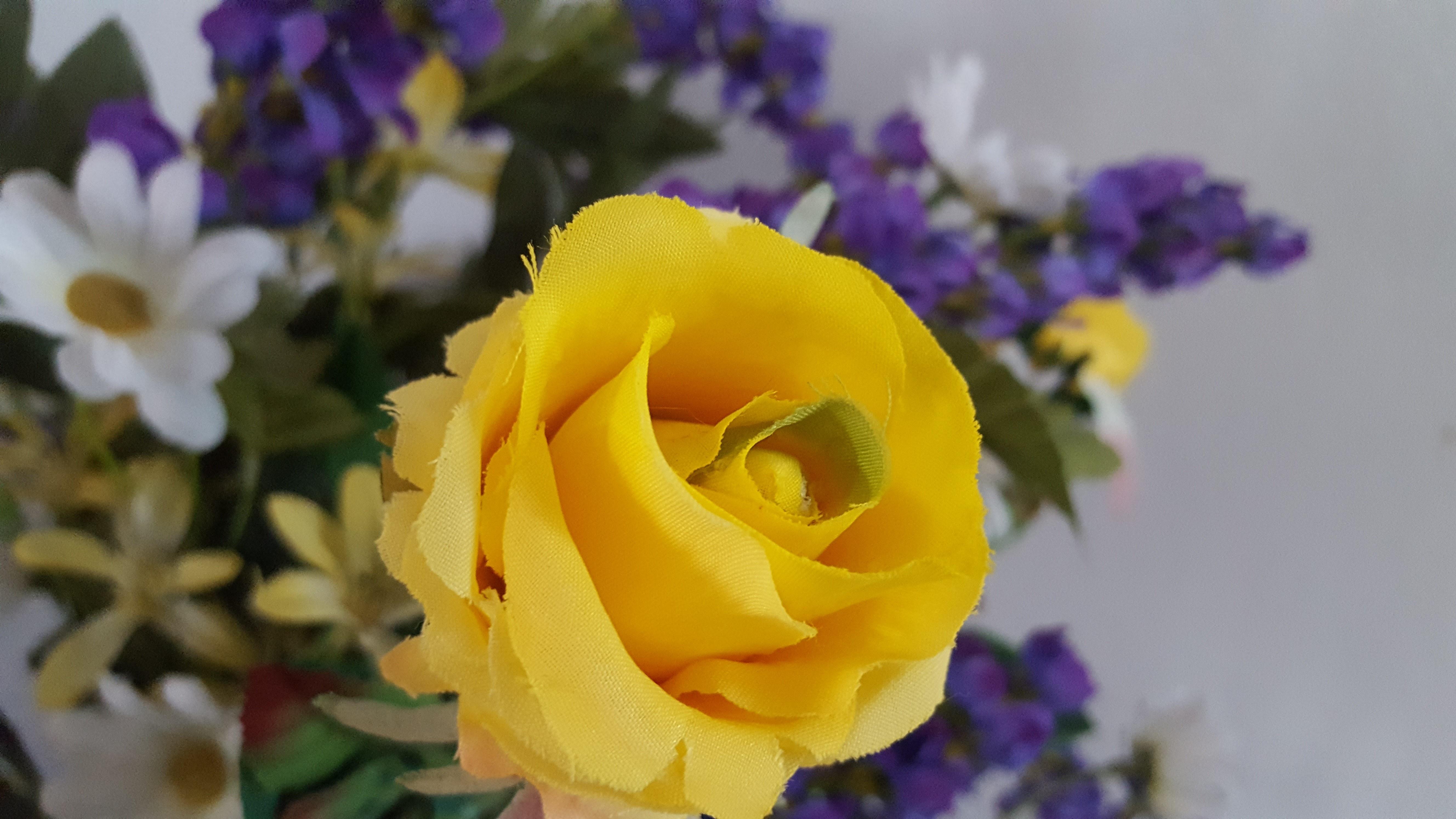Flower Yellow Rose Family Flora Flowering Plant Petal Wildflower Floristry Cut Flowers Order