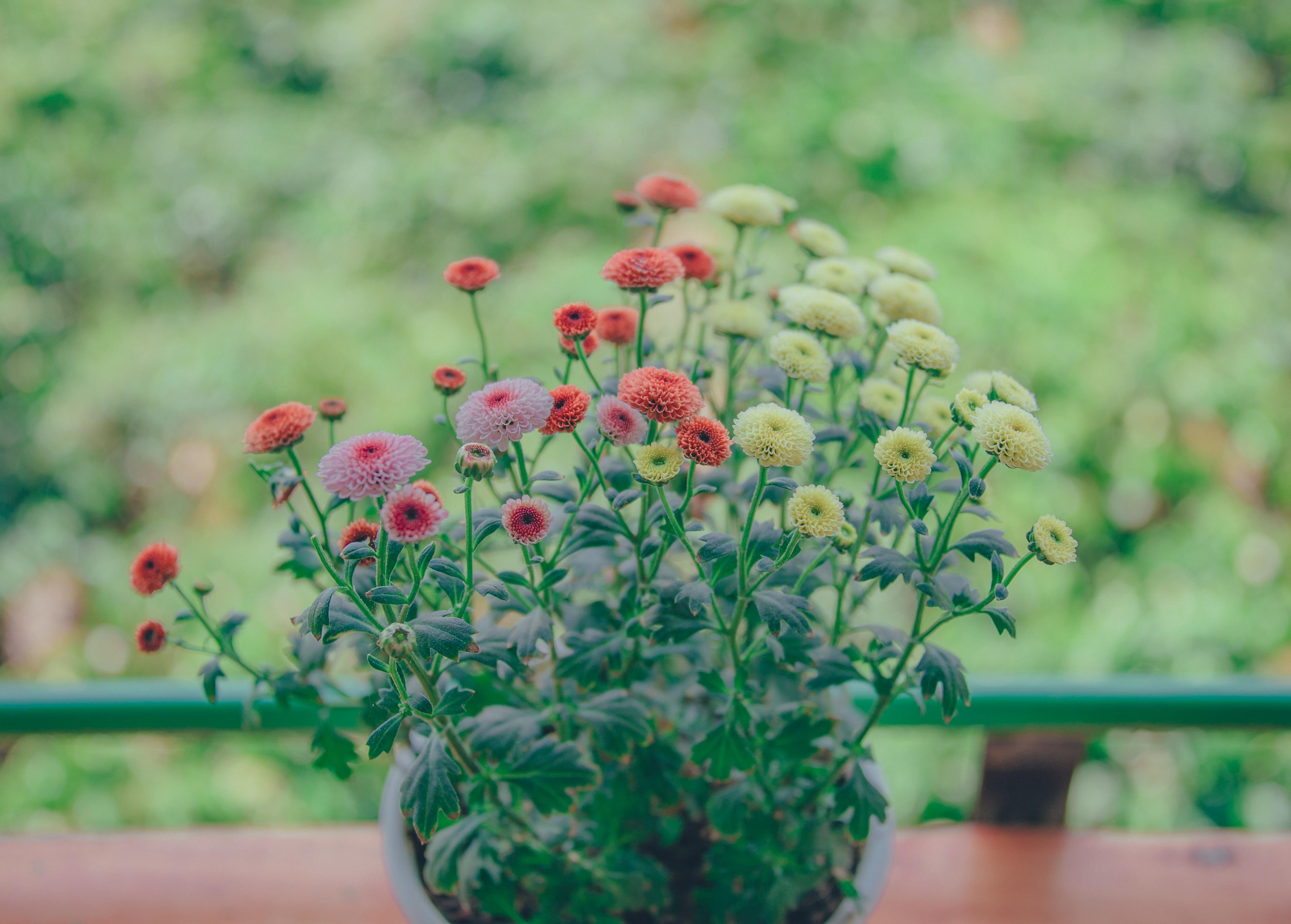 61 Gambar Pemandangan Bunga Indah Terbaru