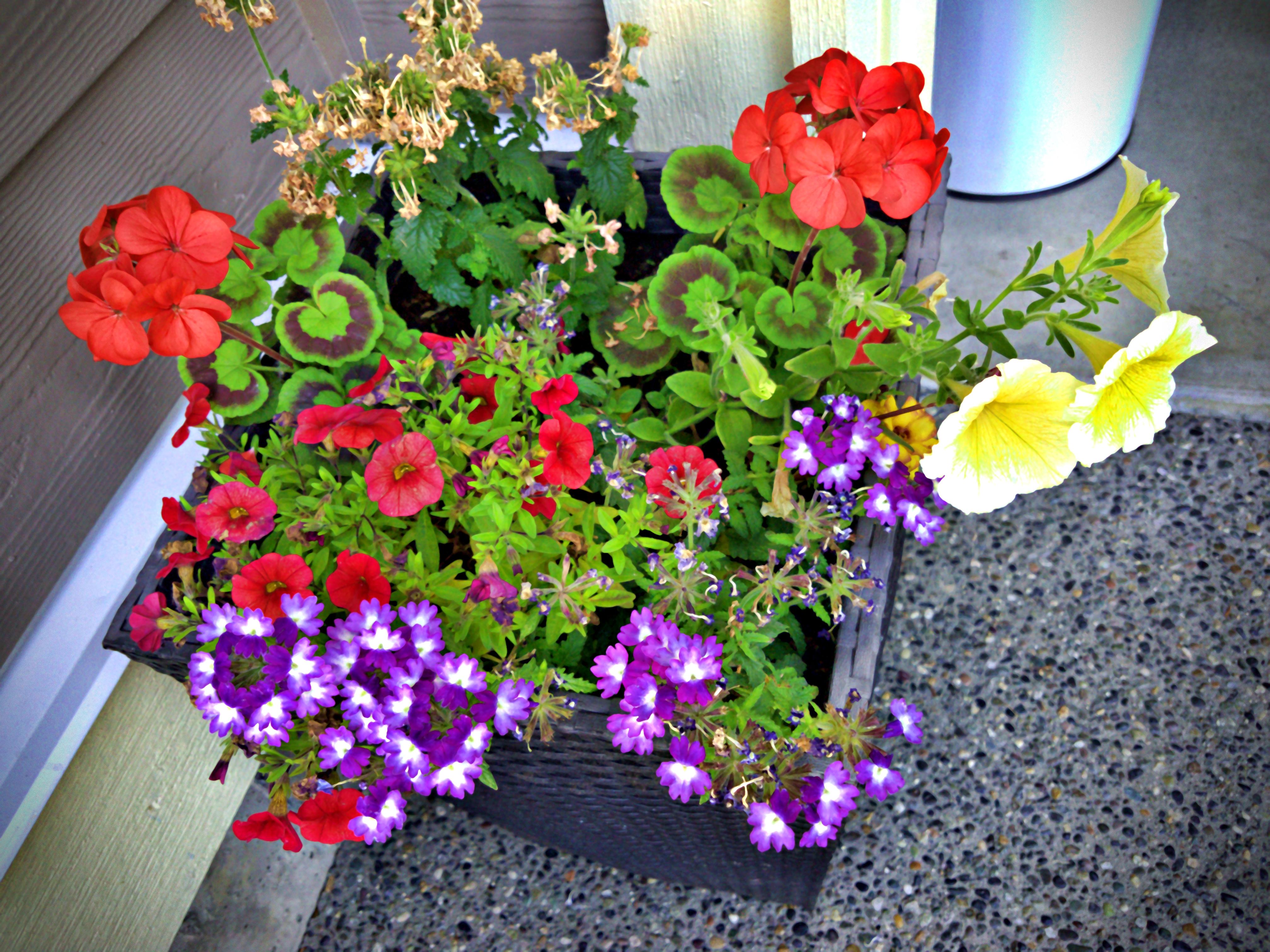 Poze Colorat Diversitate Proaspăt Floră Floare Planta