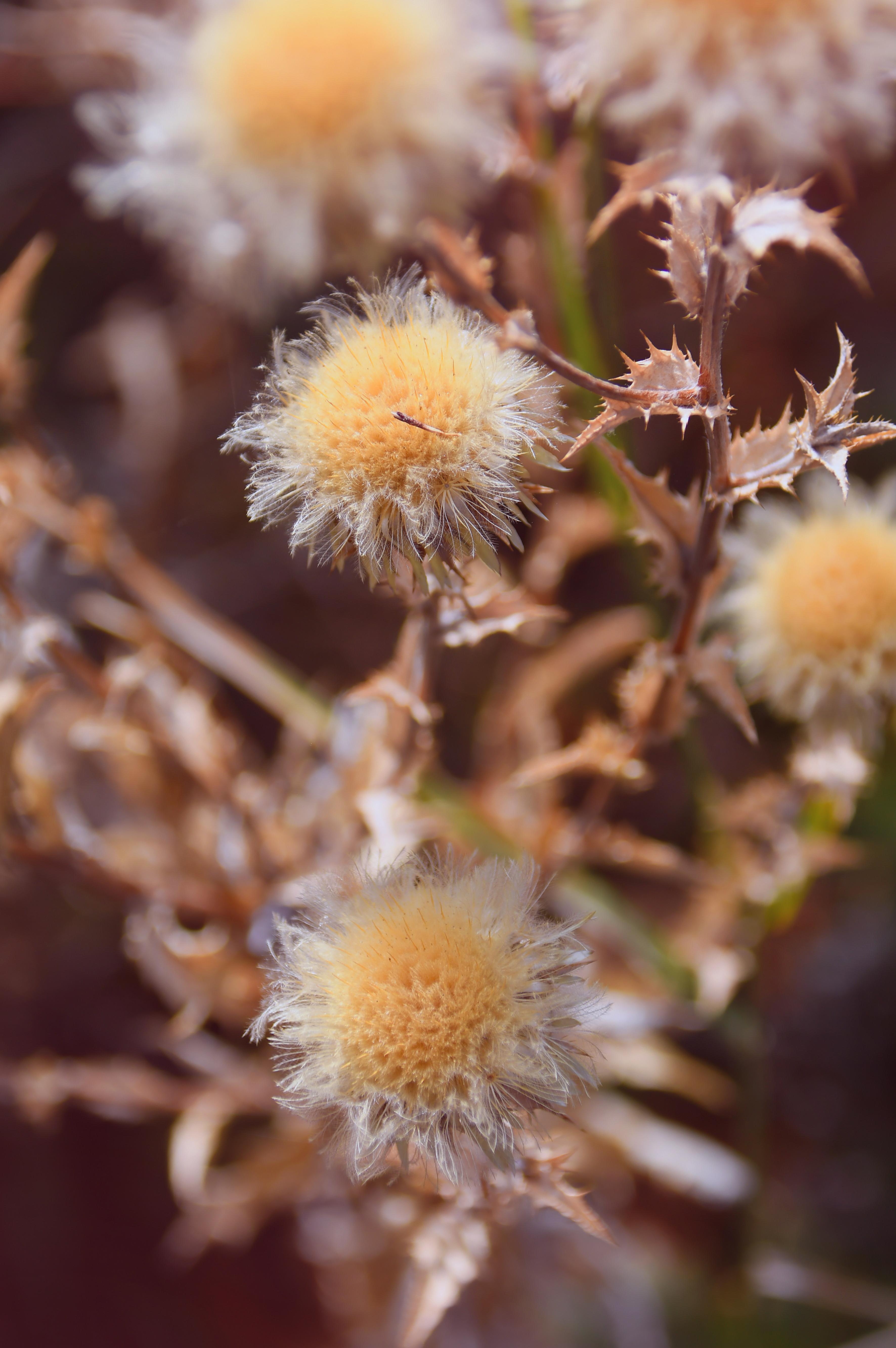 Gambar Bunga Bunga Kering Musim Gugur Terpencil Latar