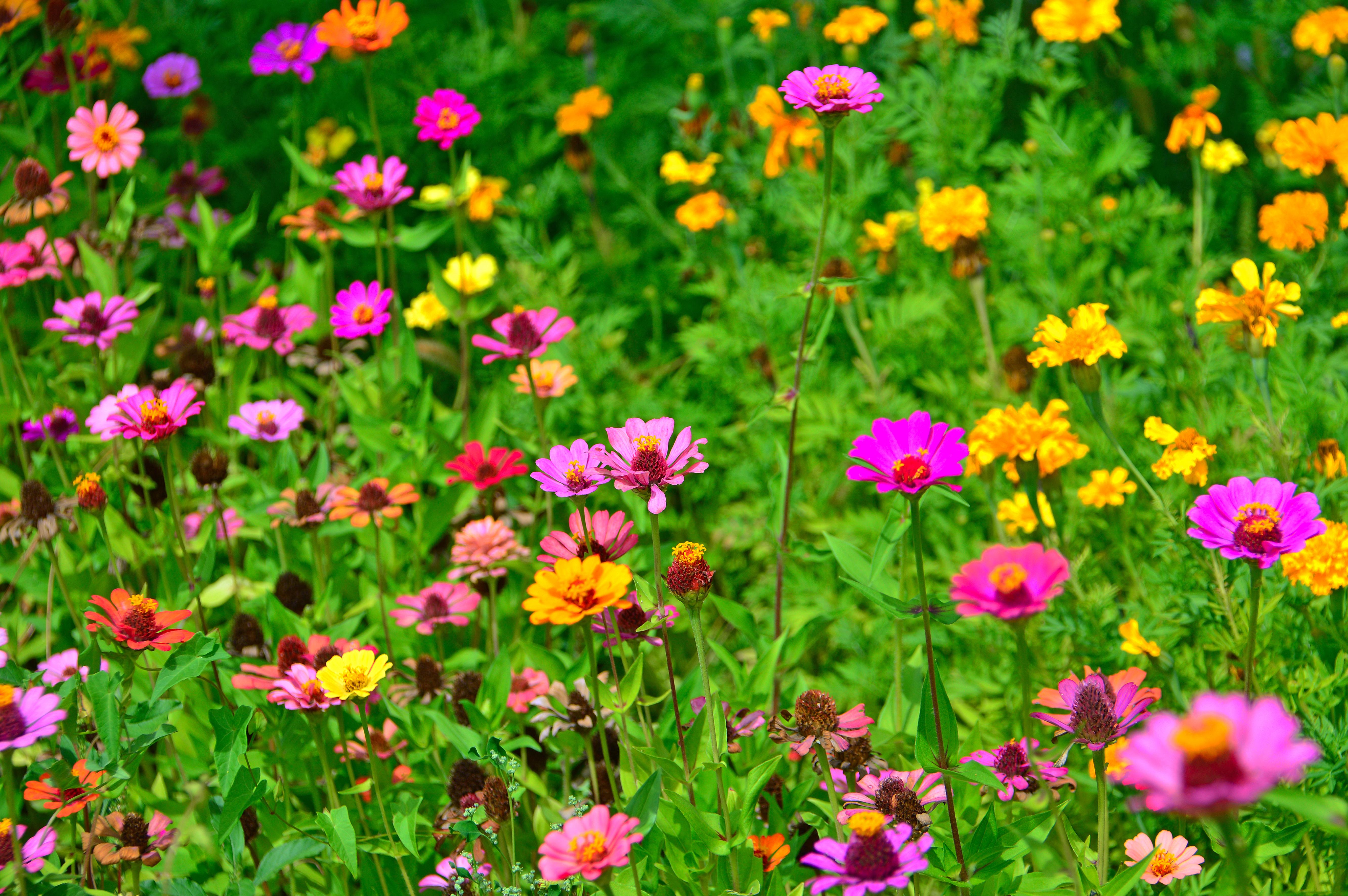Free Images Flowers Flower Wildflowers Field Meadow Summer
