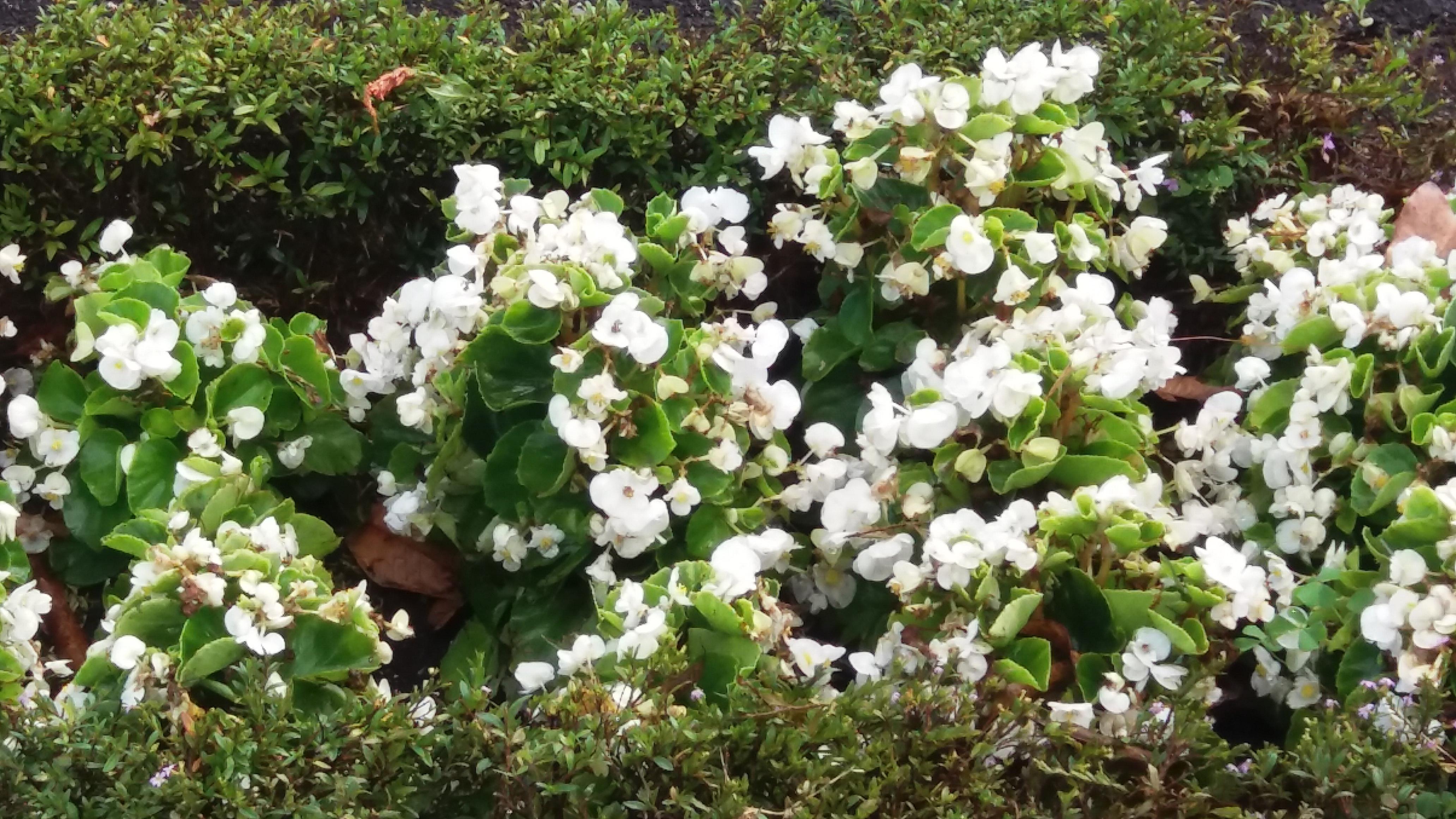 Fiori Gialli Yahoo.Immagini Belle Fiori Natura Fiore Pianta Fiorita Primavera