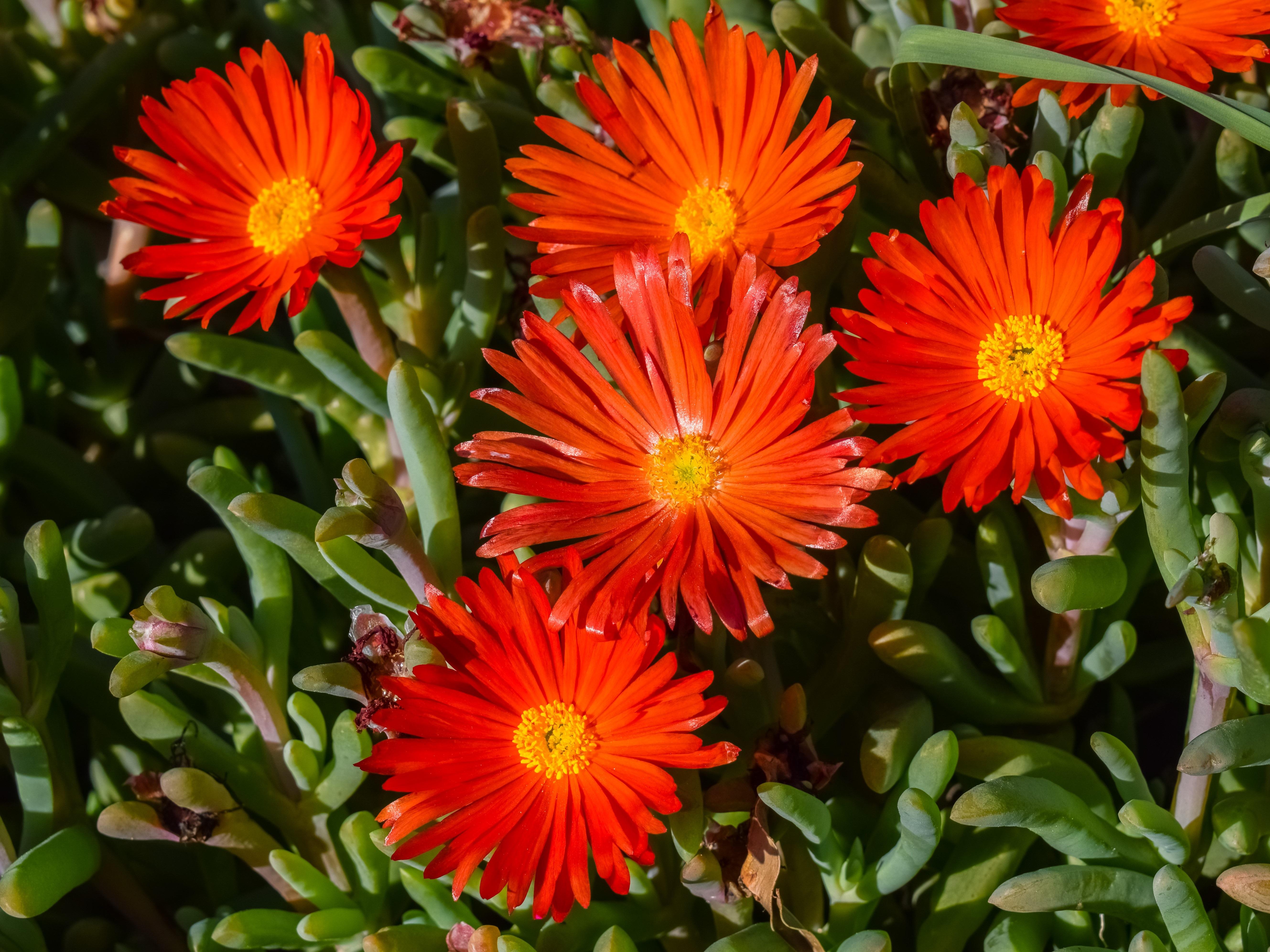 Flowers Orange Blossom Nature Bloom Flora Winter Garden
