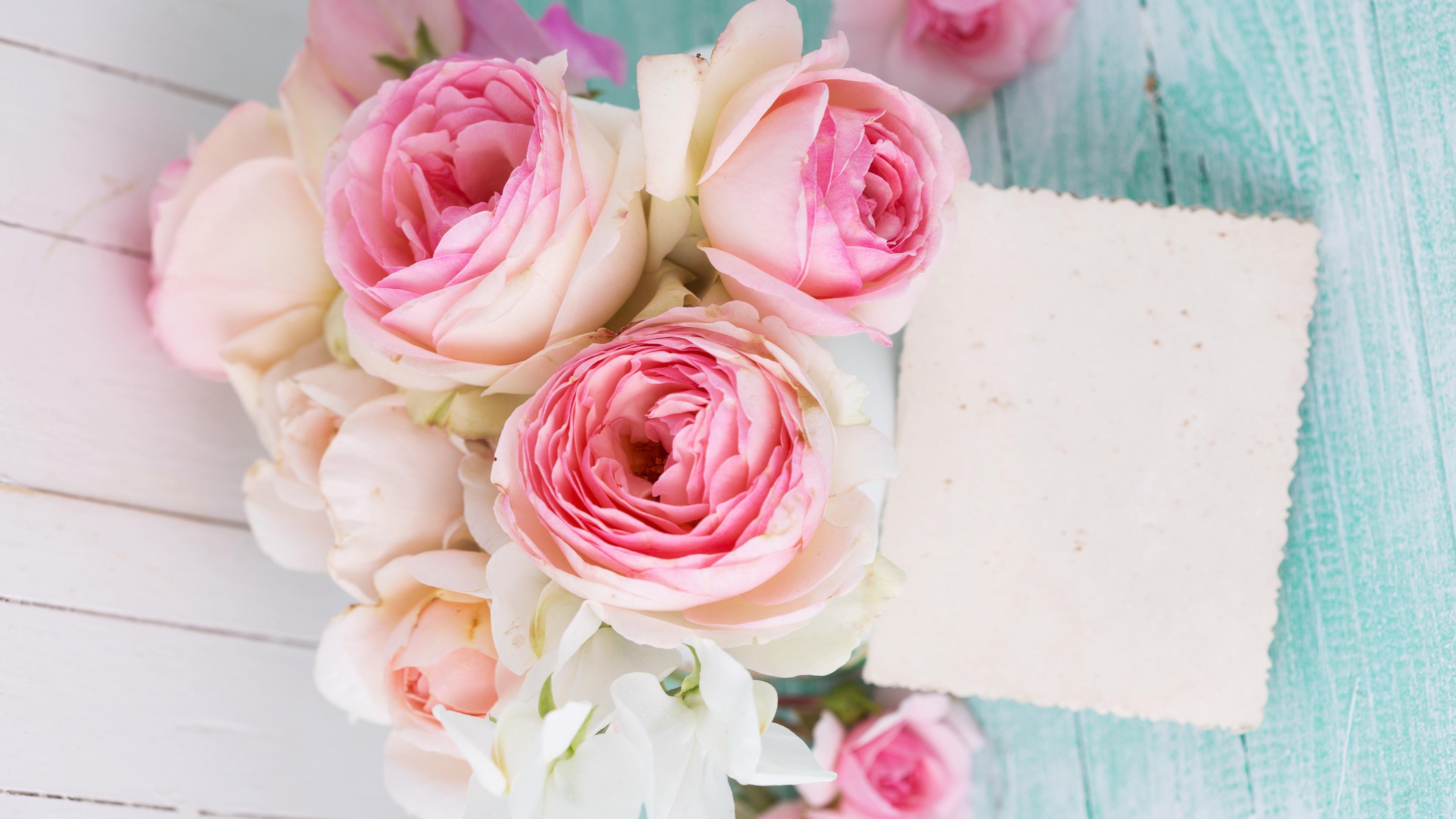 открытка с нежно розовыми цветами маки фото