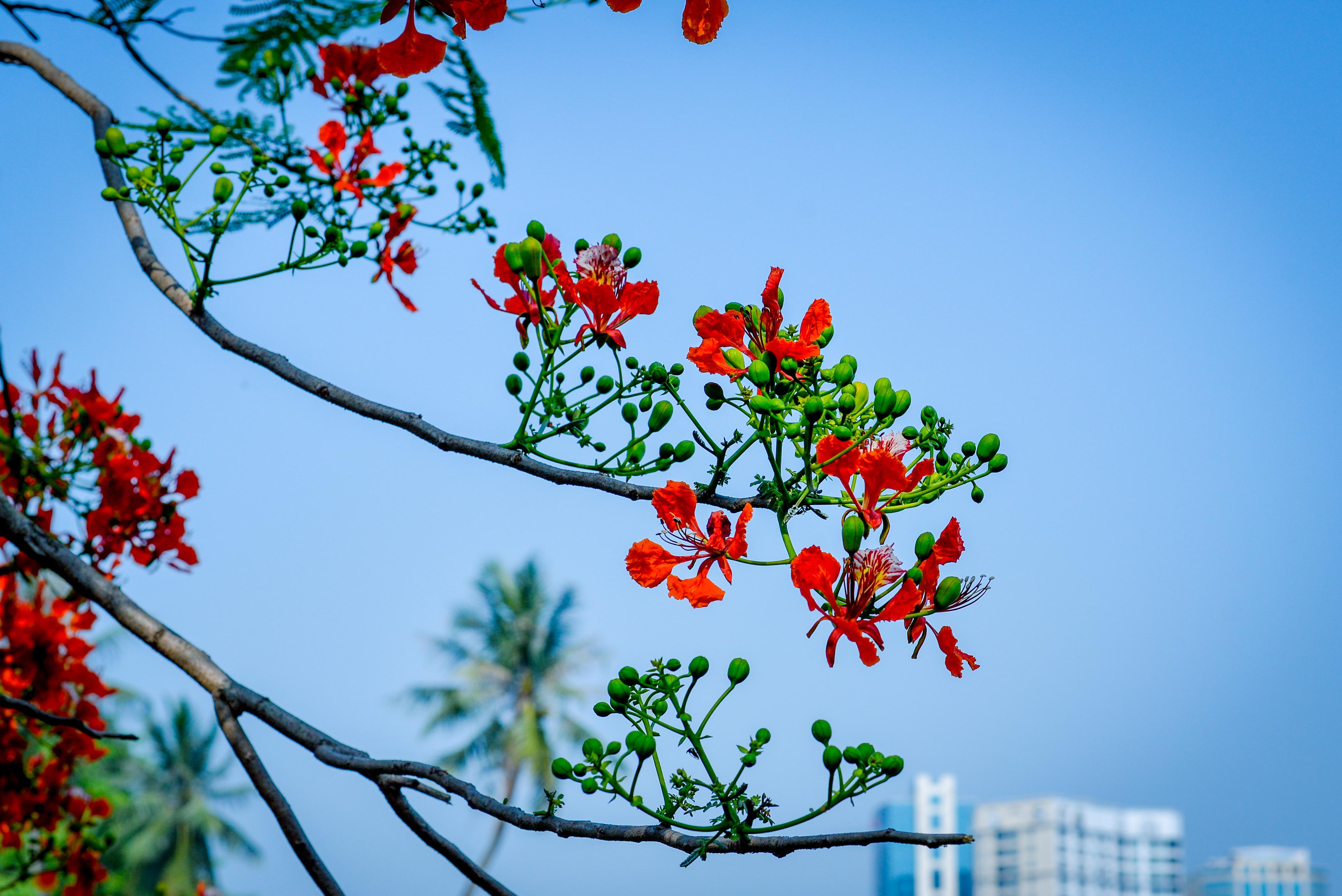 Afbeeldingen Bloemen Hemel