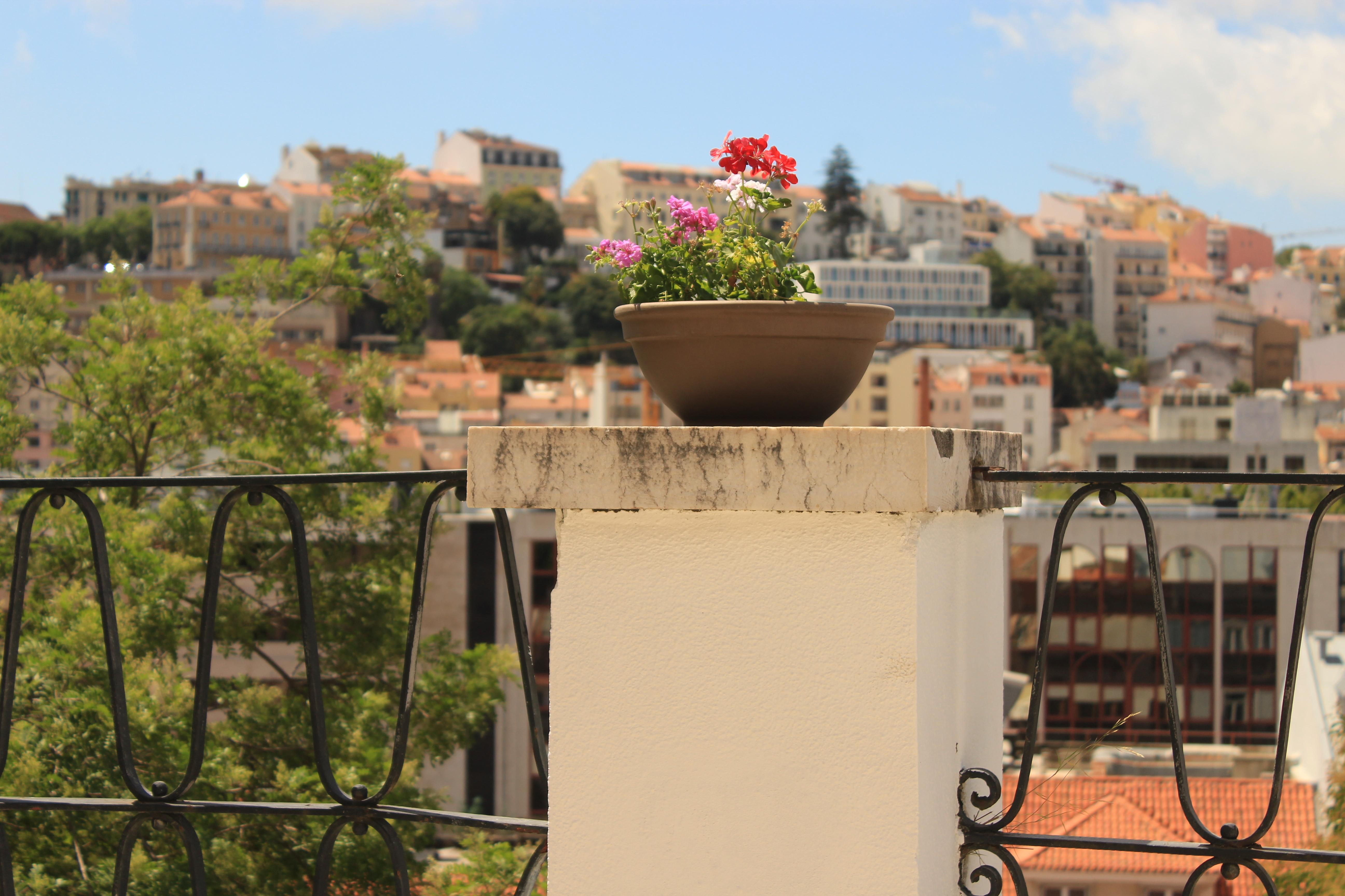 Immagini Belle : fiori, sole, Lisbona, terrazza, cielo, Portogallo ...