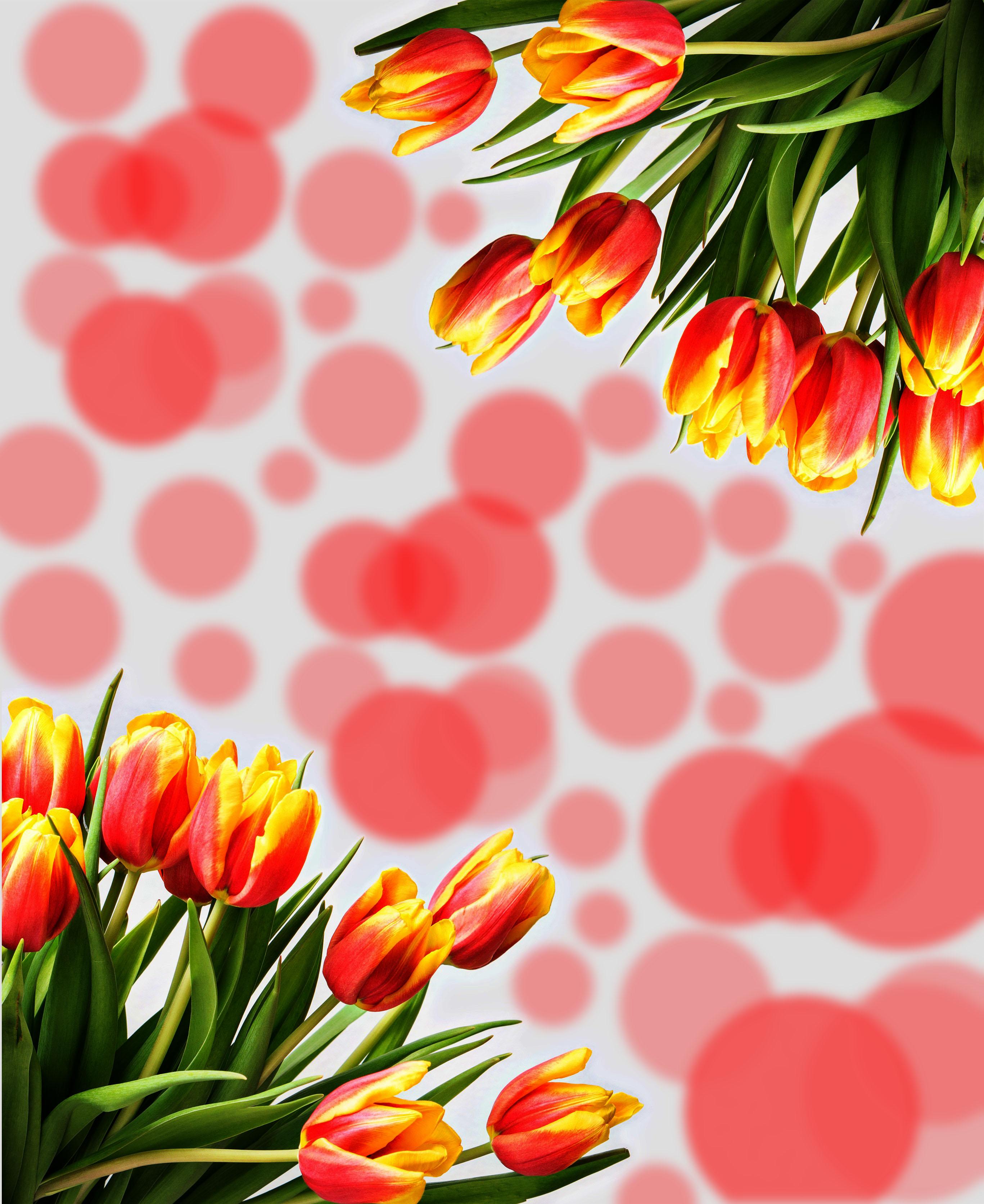 Download 82 Koleksi Wallpaper Pemandangan Bunga Tulip HD Terbaik