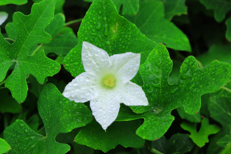 Gambar Bunga Bunga Bunga Putih Daun Daun Daun Daun Hijau