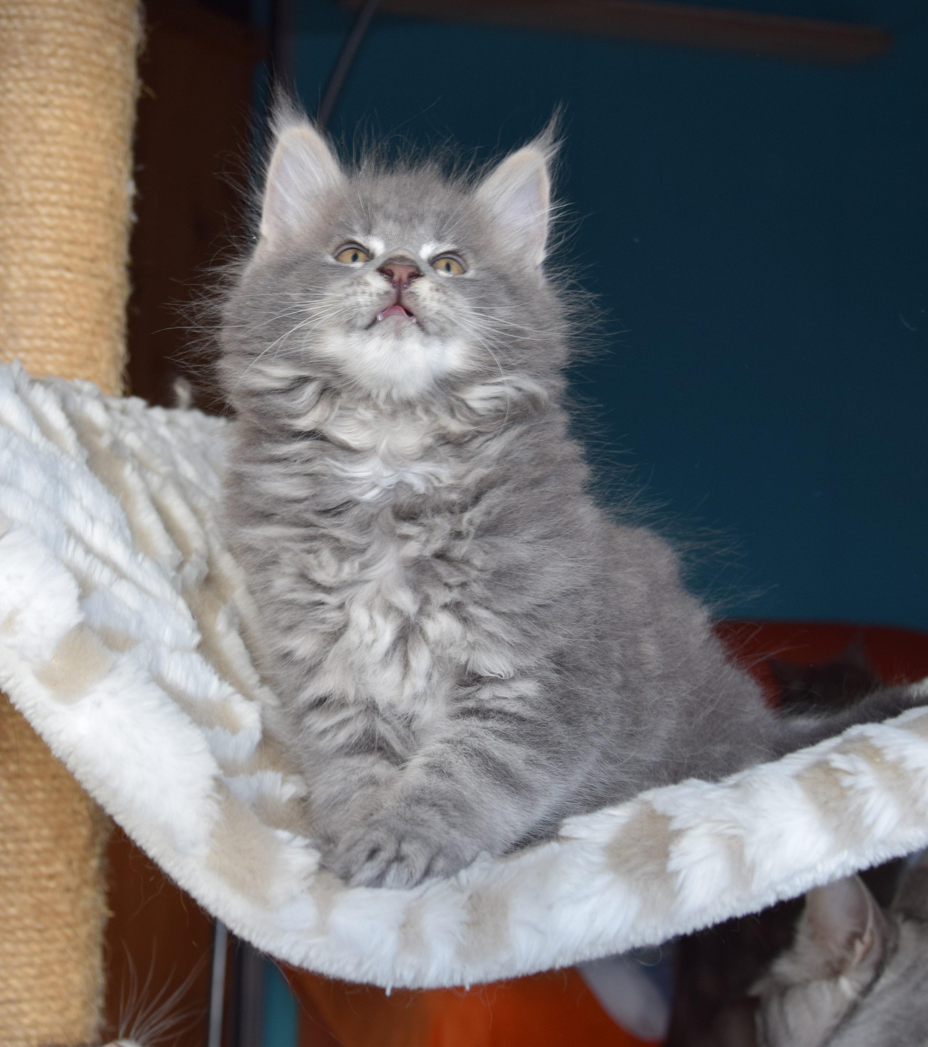 38+ Hewan peliharaan kucing persia medium terupdate