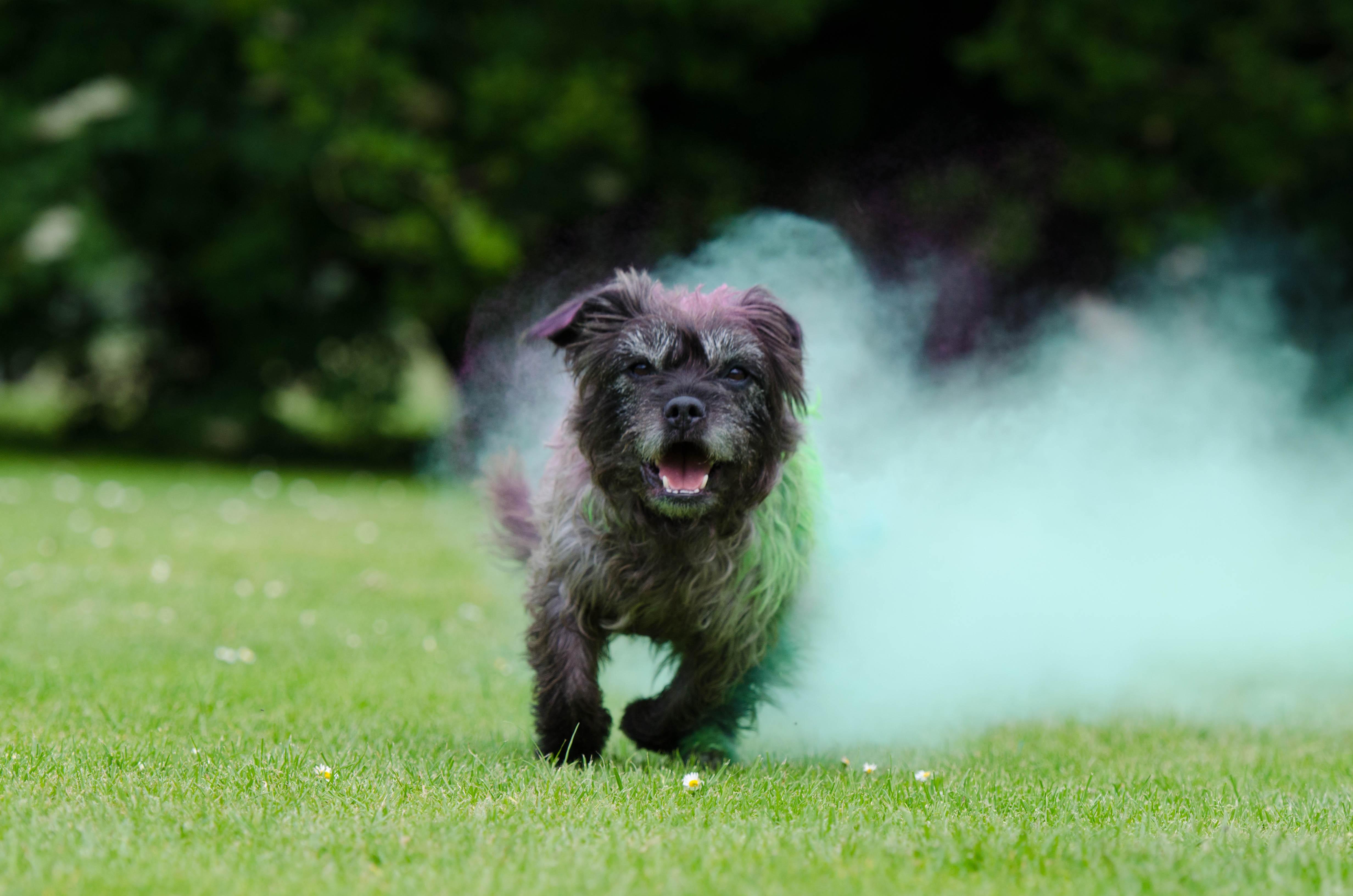 Free Images Fog Puppy Vertebrate Funny Dog Breed
