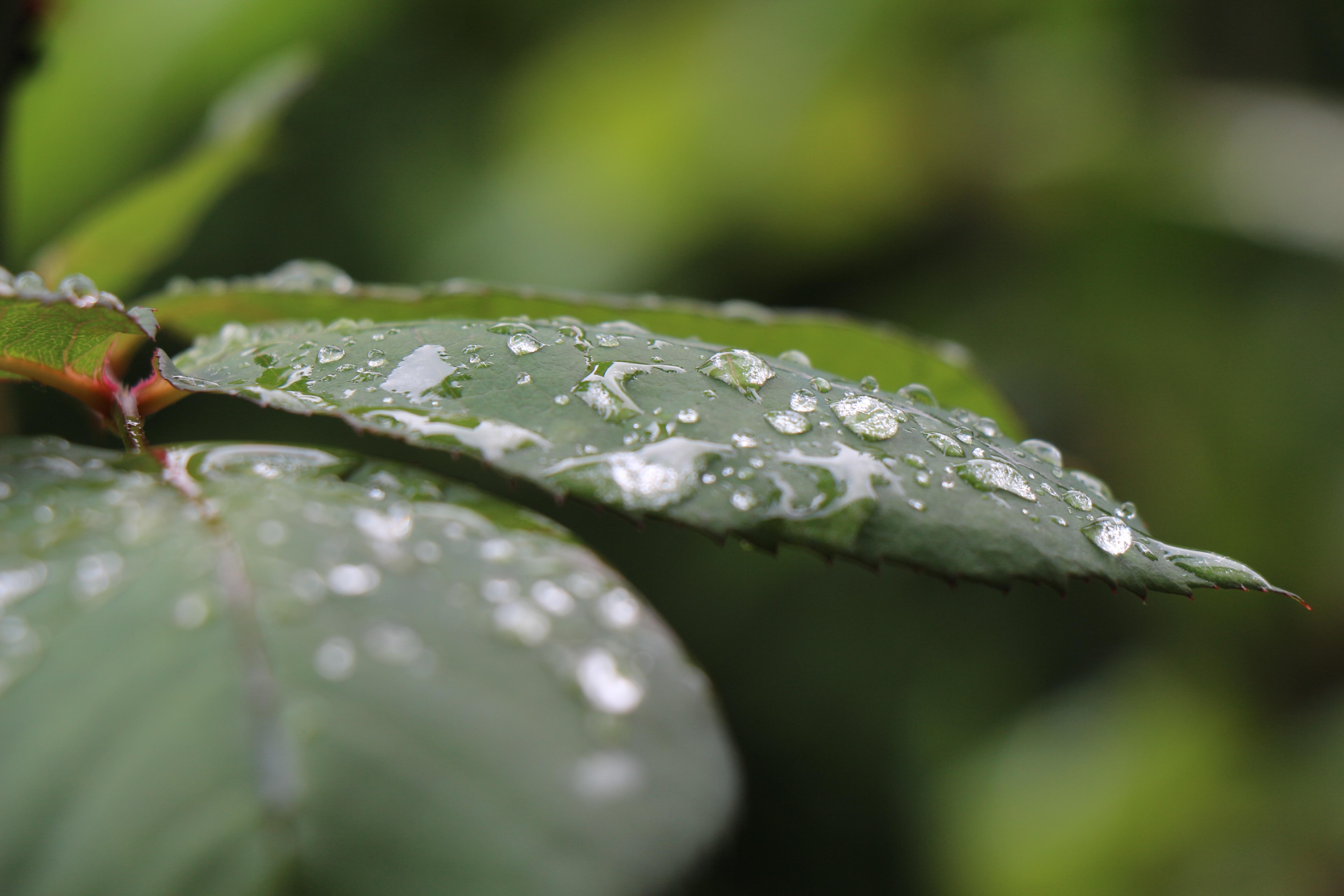 Gambar Dedaunan Tetesan Air Titisan Hujan Daun Daun Setelah