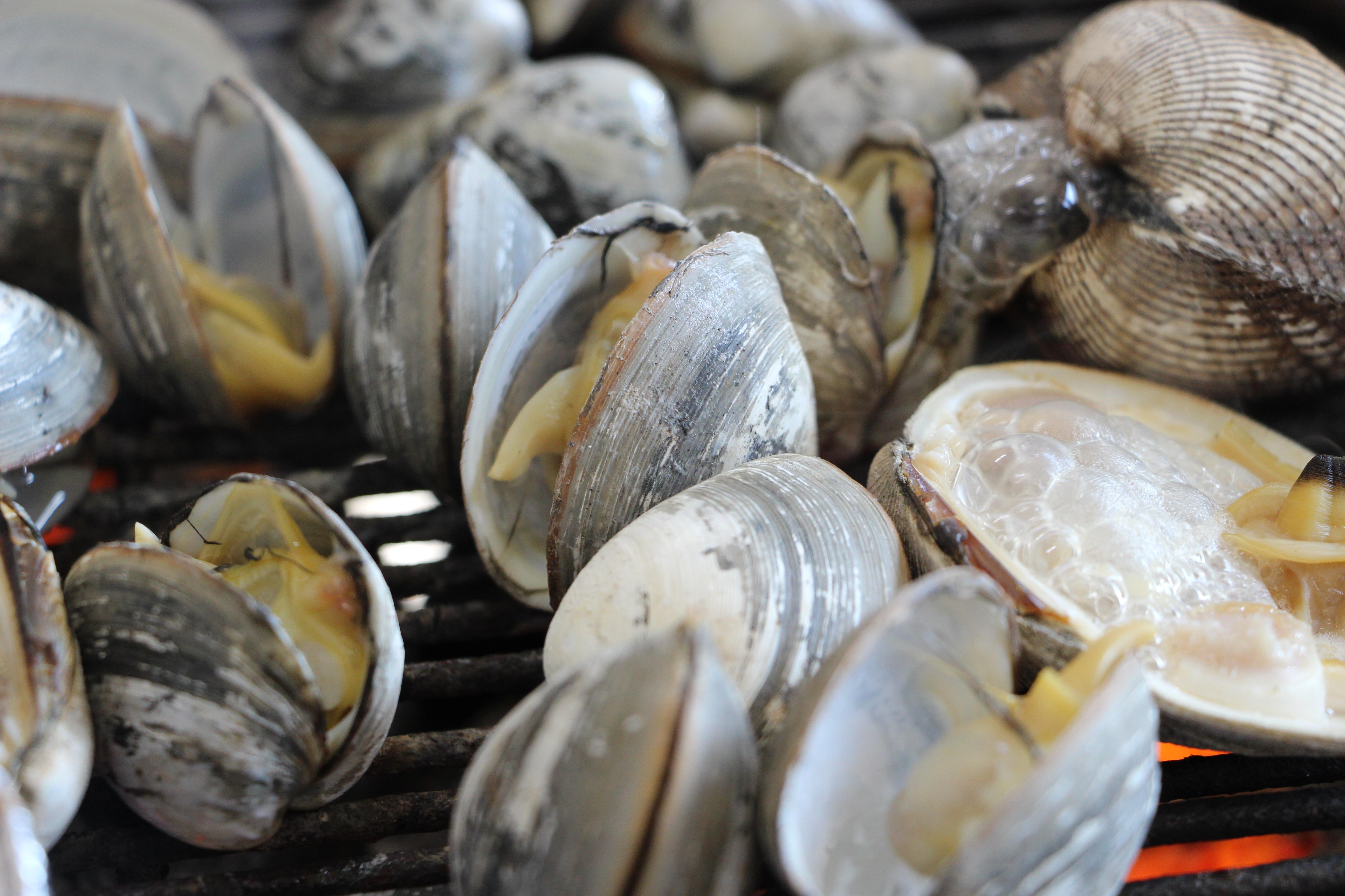 Banco de imagens comida cozinhando ostra frutos do for Public fish and oyster