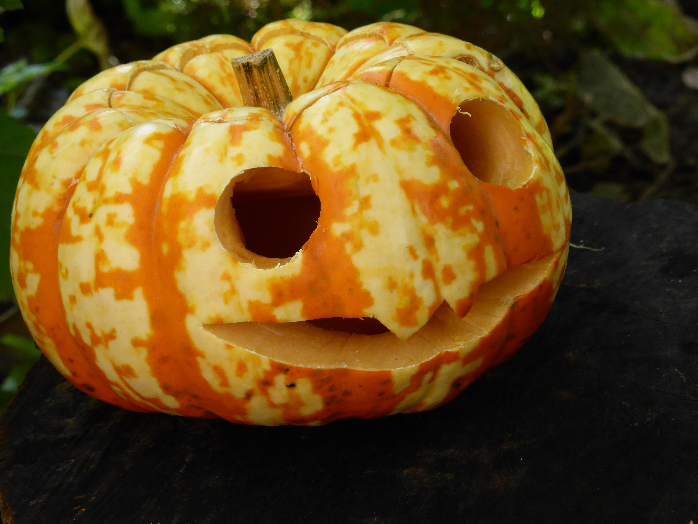 Kostenlose Foto Lebensmittel Ernte Produzieren Herbst